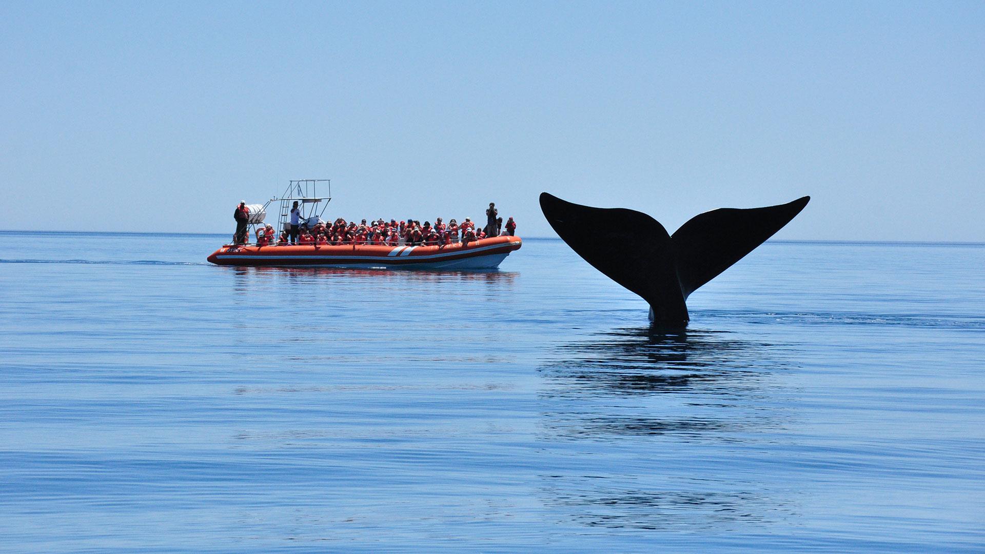 Distinguen a Península Valdés como destino líder en avistaje de ballenas en Sudamérica - Infobae