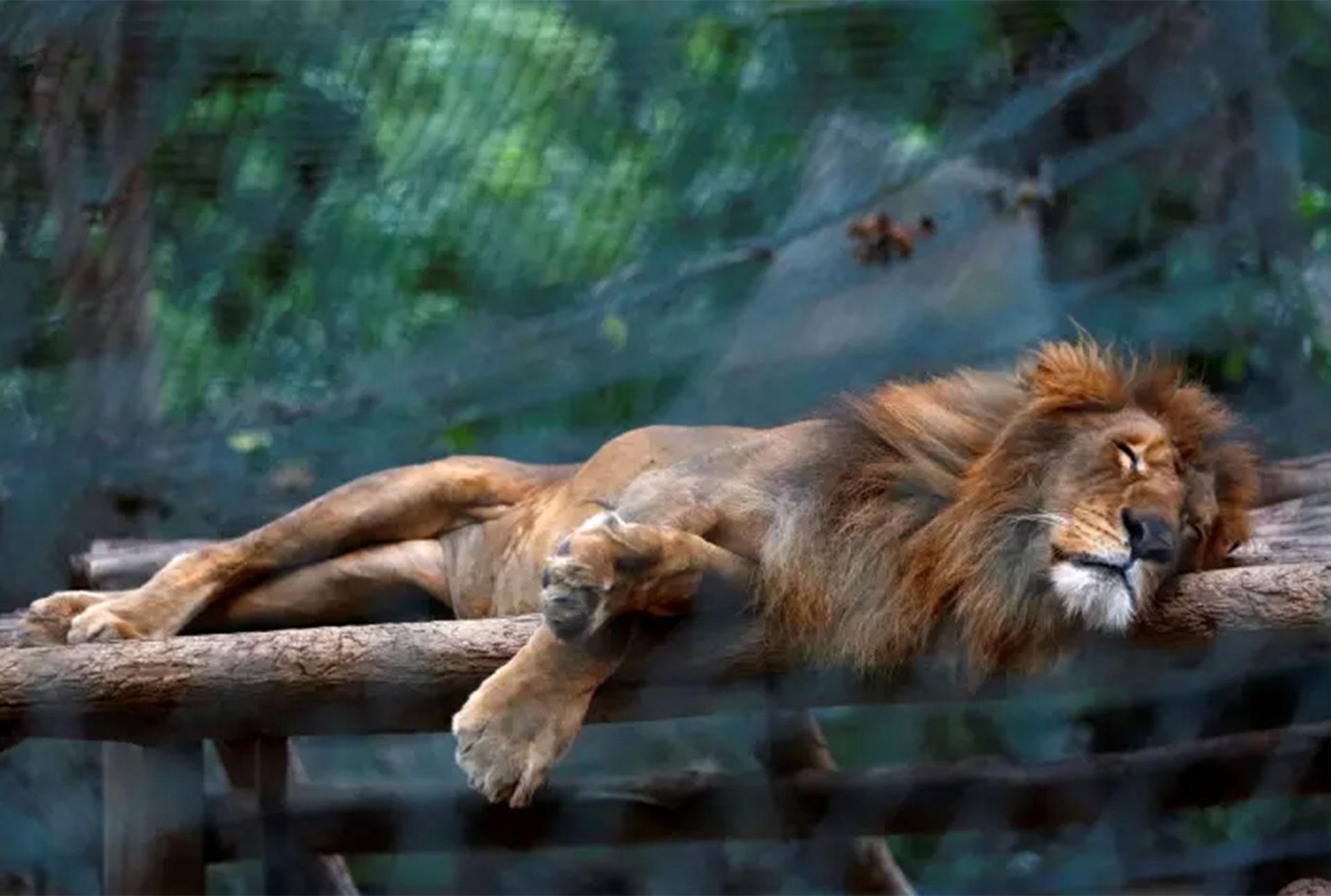 Unos 50 animales del zoológico público de Caricuao han muerto de inanición en los últimos seis meses (Reuters)
