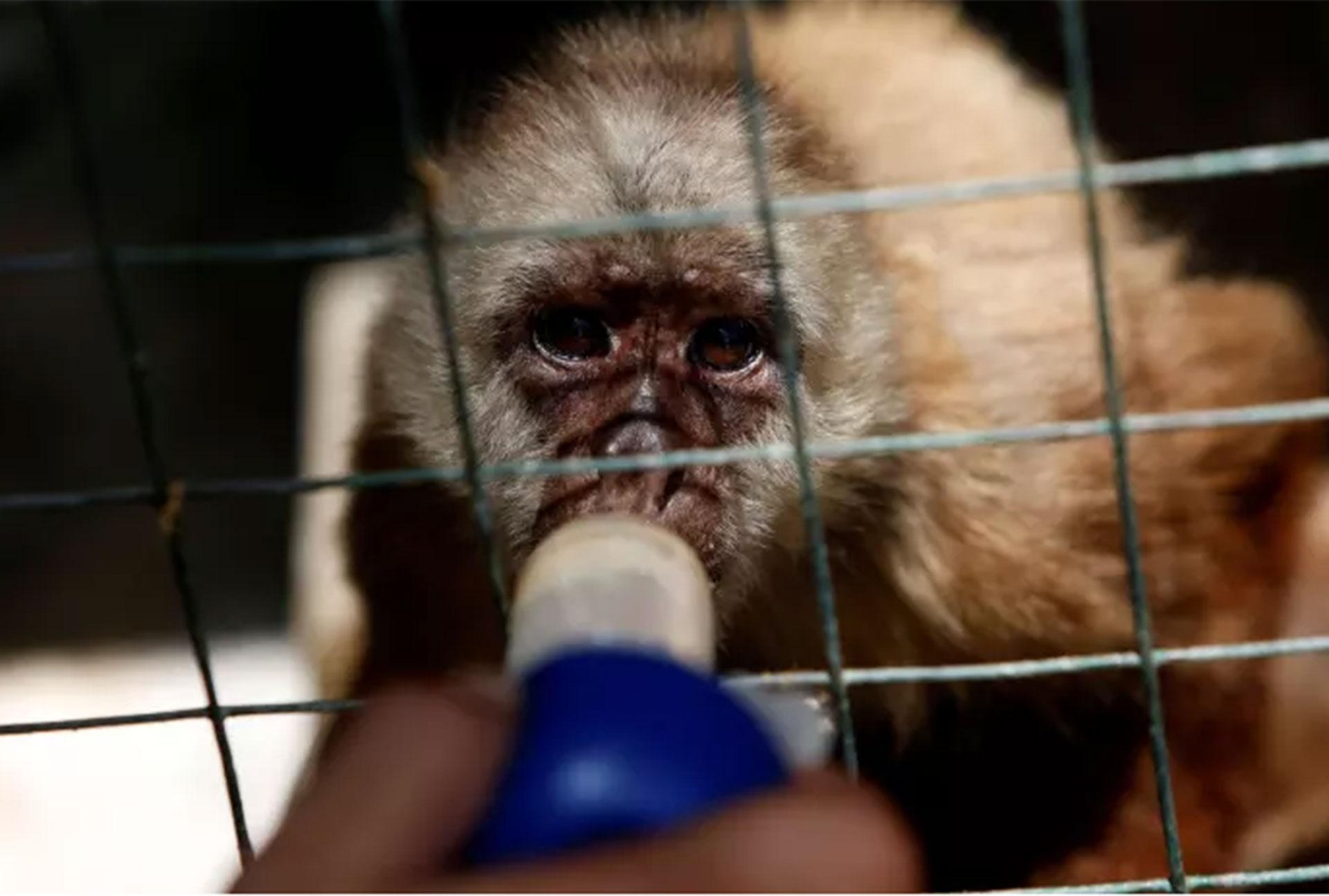 El zoológico de Paraguaná, en el costero estado de Falcón, reportó en mayo la muerte de tres animales