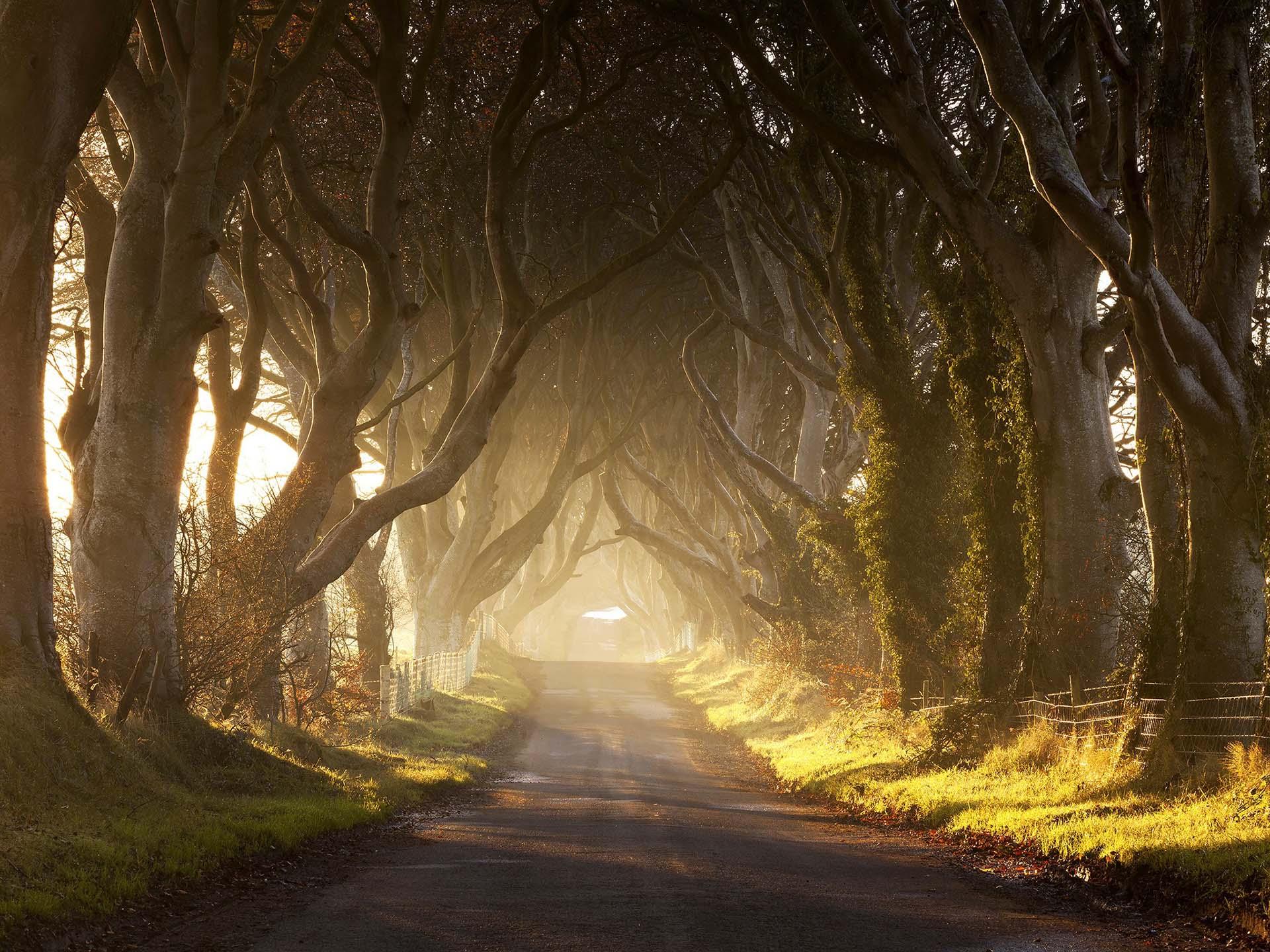 Con el sol velado y las largas sombras de estos setos oscuros en Irlanda del Norte, Arya pudo escabullirse de King's Landing disfrazada de niño