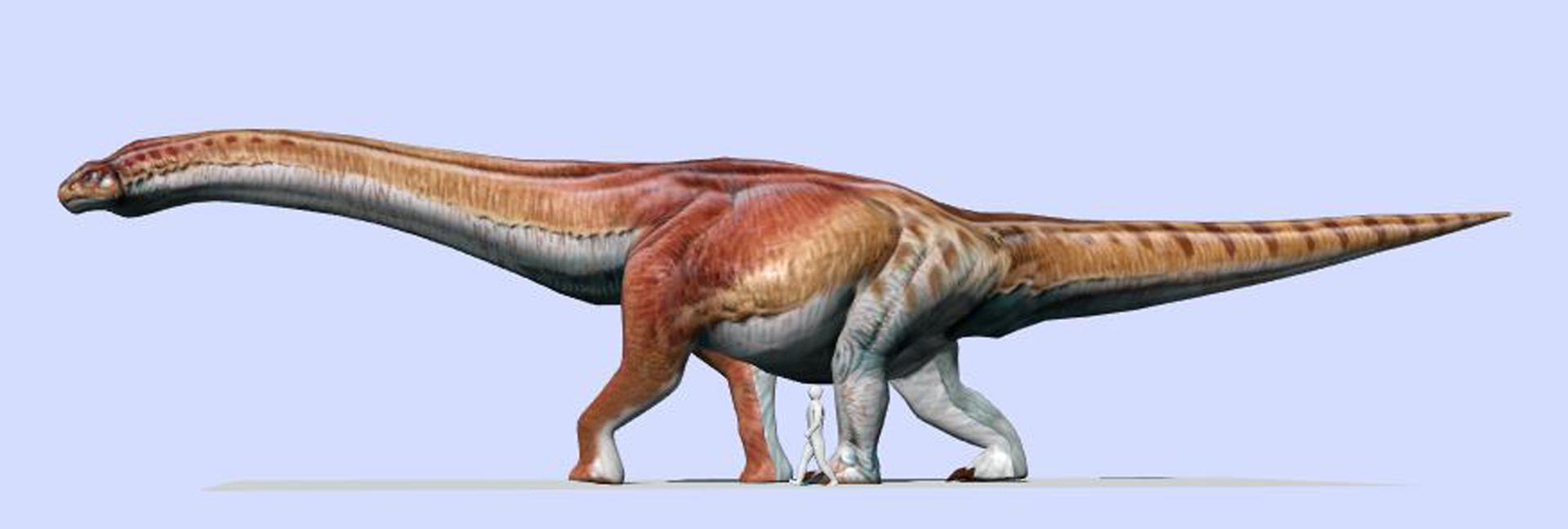 El Patagotitan mayorum, en comparación con el tamaño humano (MEF)
