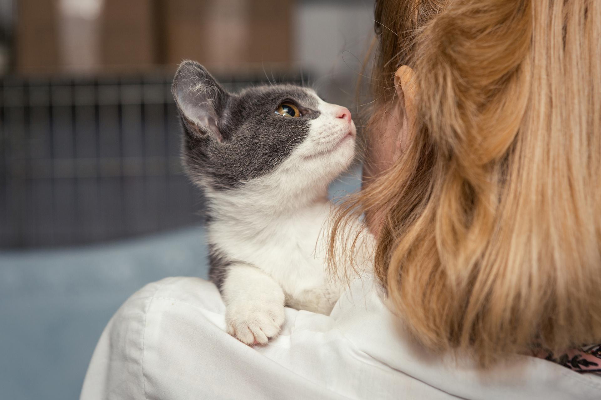 Si el animal proviene de un refugio es conveniente estar al tanto del tipo de comportamiento que posee