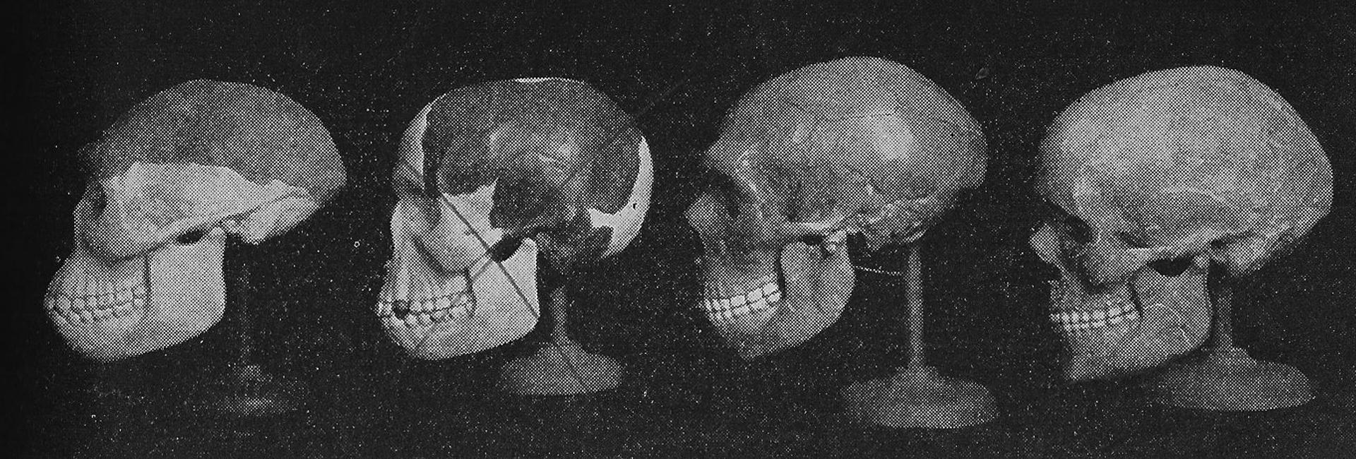 """Los cuatro hombres originarios: el hombre de Java, Piltdown -tachado-, neanderthal y el hombre de Cromañón en la edición de 1952 del libro """"Elementos de la Biología"""". Un año después, el fraude quedaba desarticulado"""