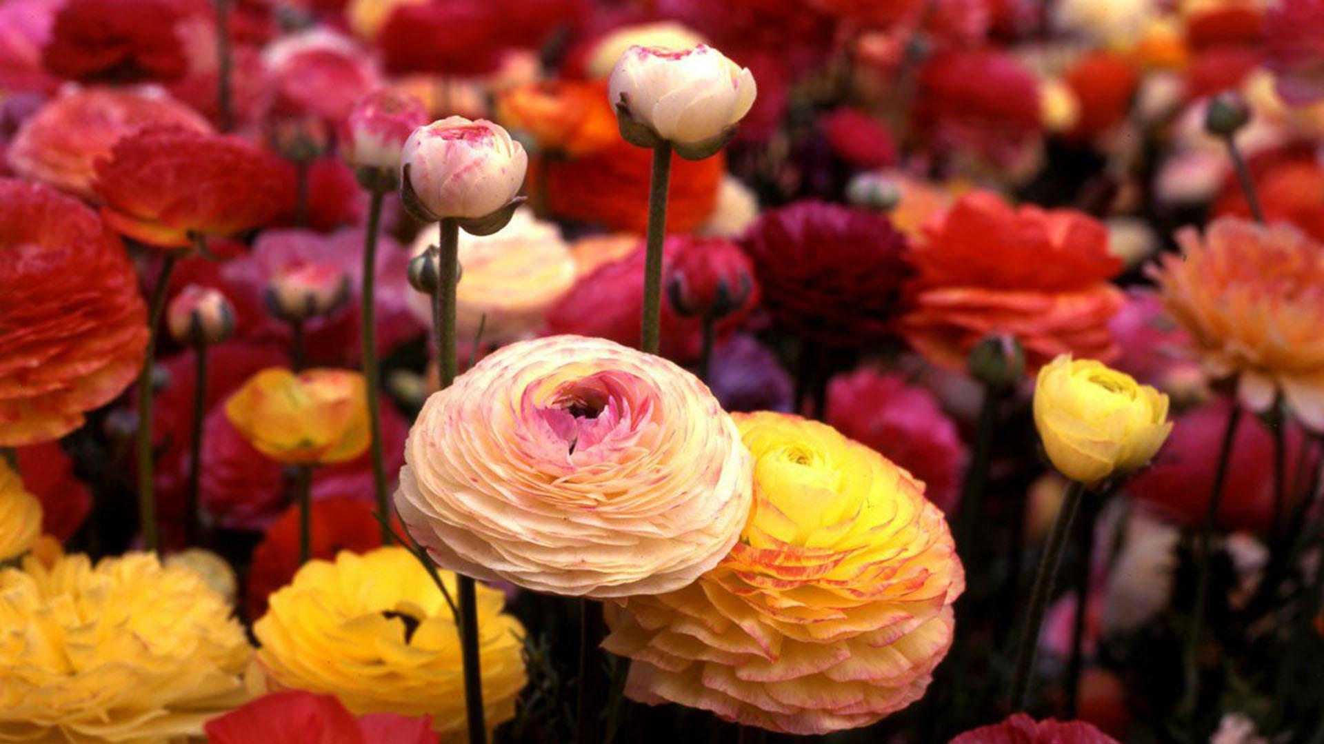 Las 10 Flores Que Seran Tendencia Durante La Primavera Infobae