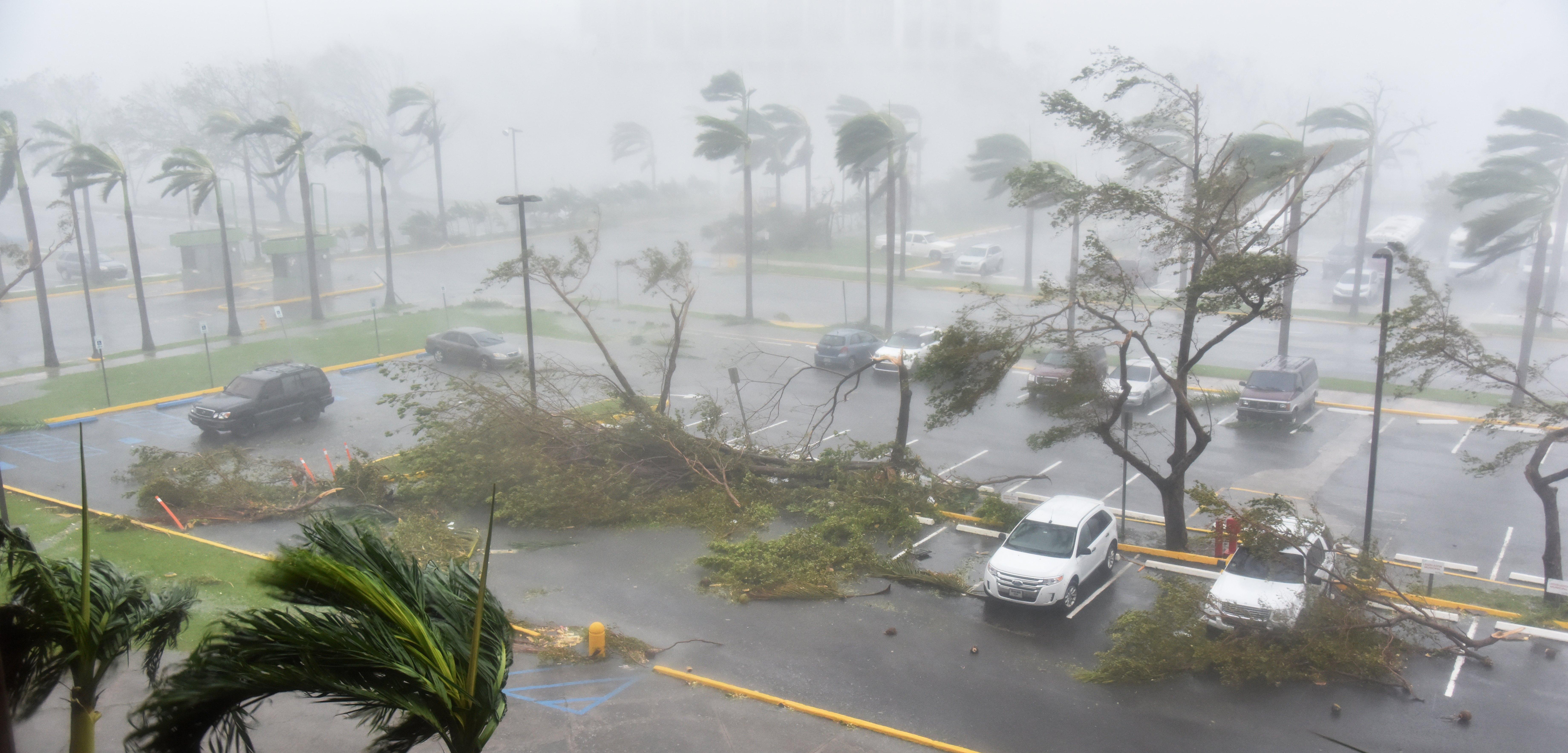 Árboles caídos en un estacionamiento tras el paso de Irma por San Juan, Puerto Rico