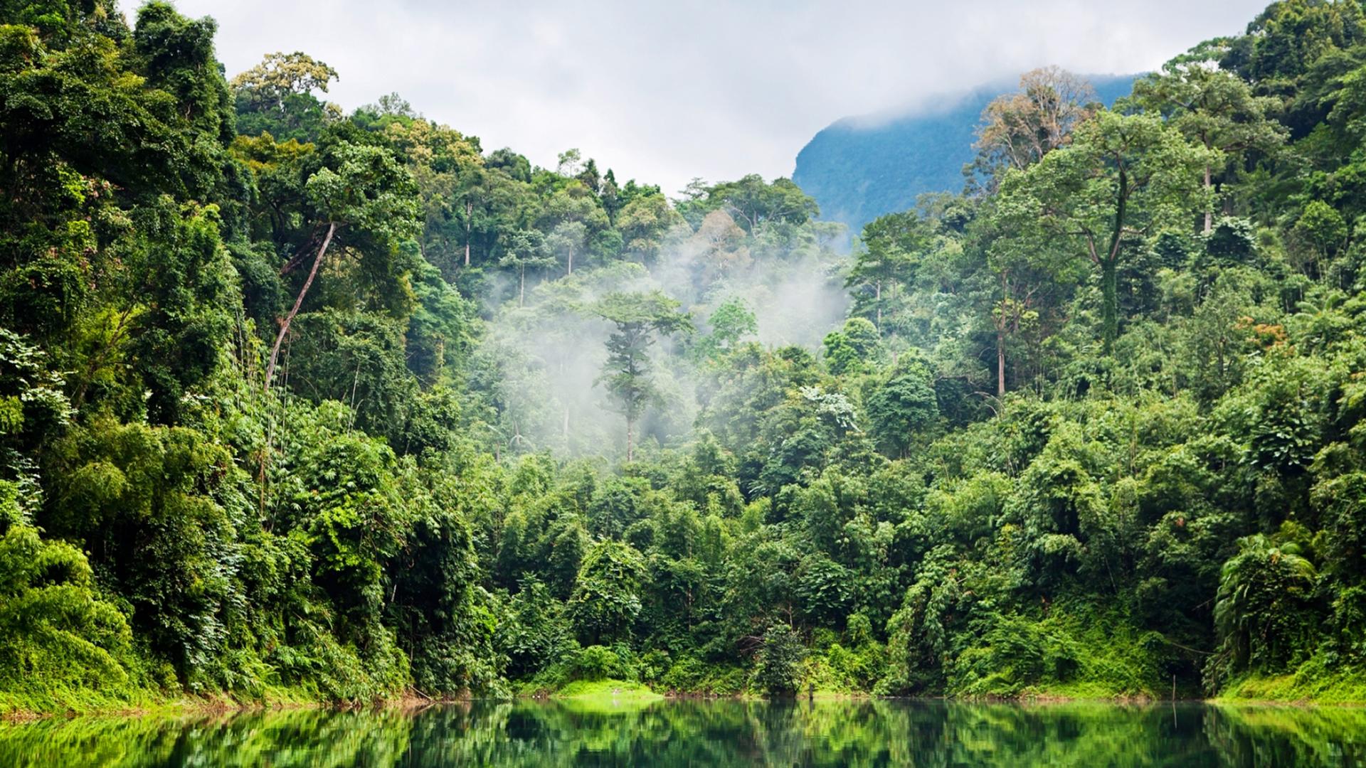 La deforestación hace que el suelo no pueda retener el carbono, que pasa a la atmósfera.