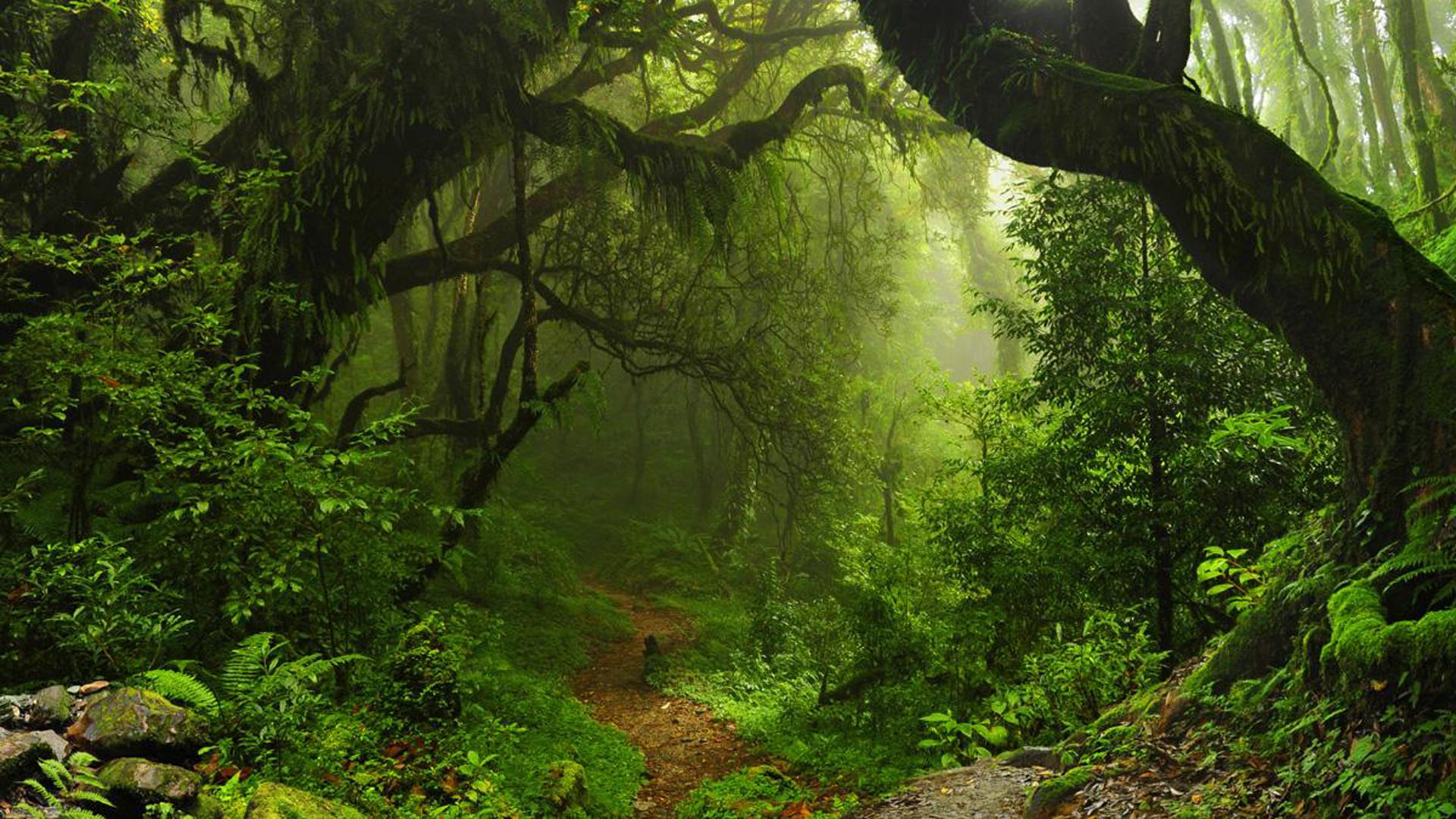 Al medir las ceras vegetales como indicador, los científicos hallaronque la tala reduce la capacidad del suelo para retenerun factor clave del efecto invernadero.