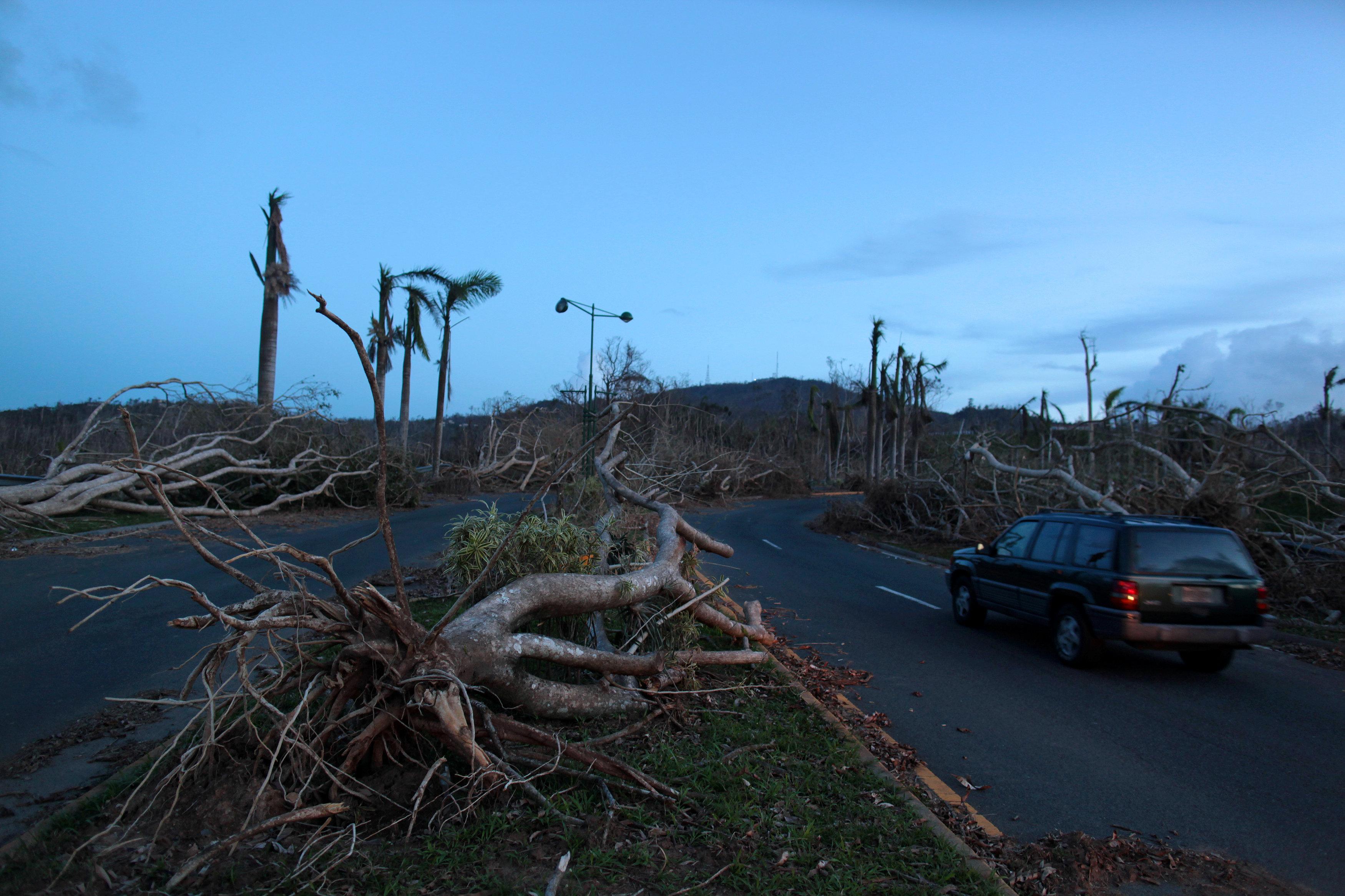 Árboles destruidos en Guaynabo (Reuters)