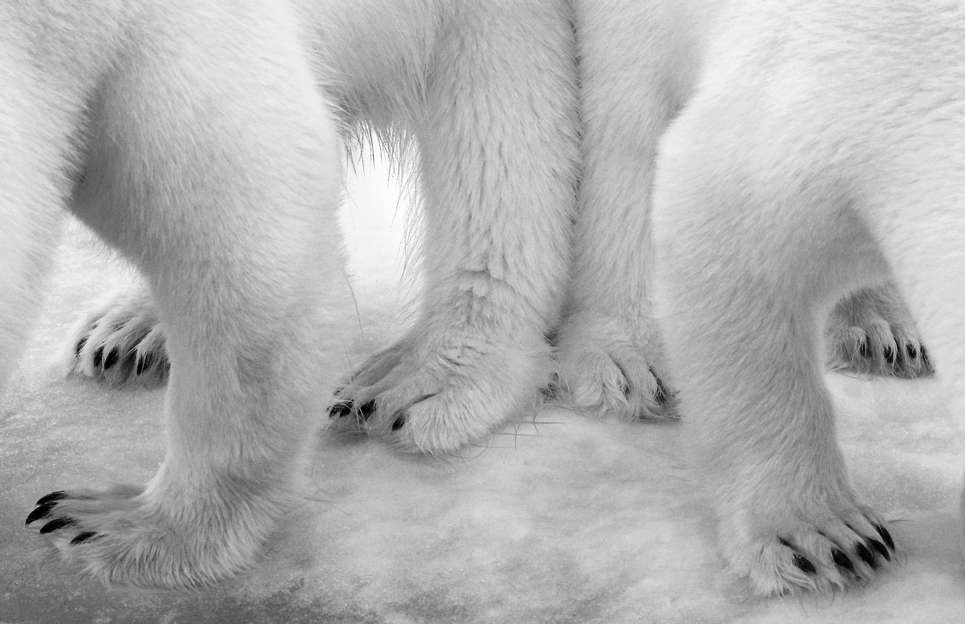 """'Polar Pas de Deux', de Eilo Elvinger. Categoría: """"Negro y blanco"""""""