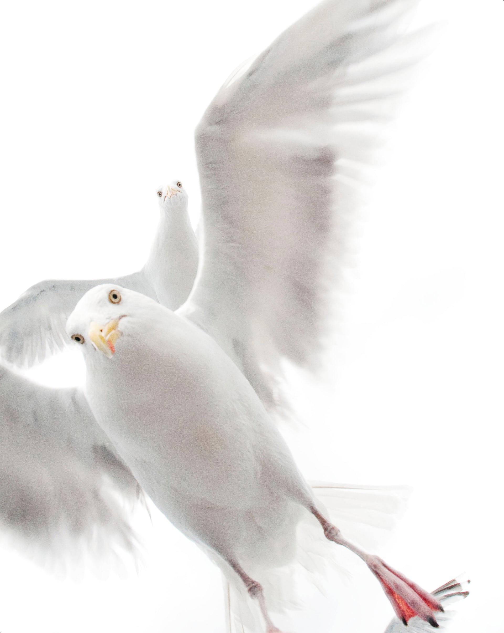 "'The Grip of the Gulls', de Ekaterina Bee. Categoría: ""Sub-10"""