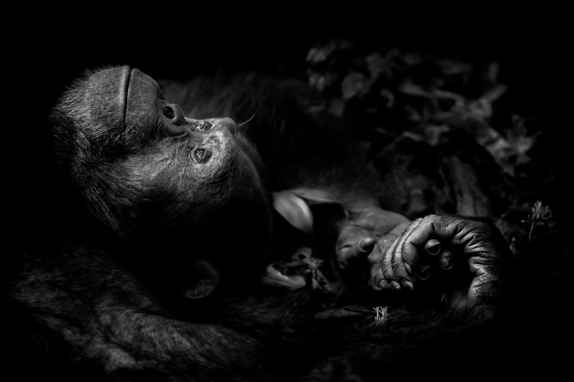 """'Contemplation', de Peter Delaney. Categoría: """"Retratos de animales"""""""