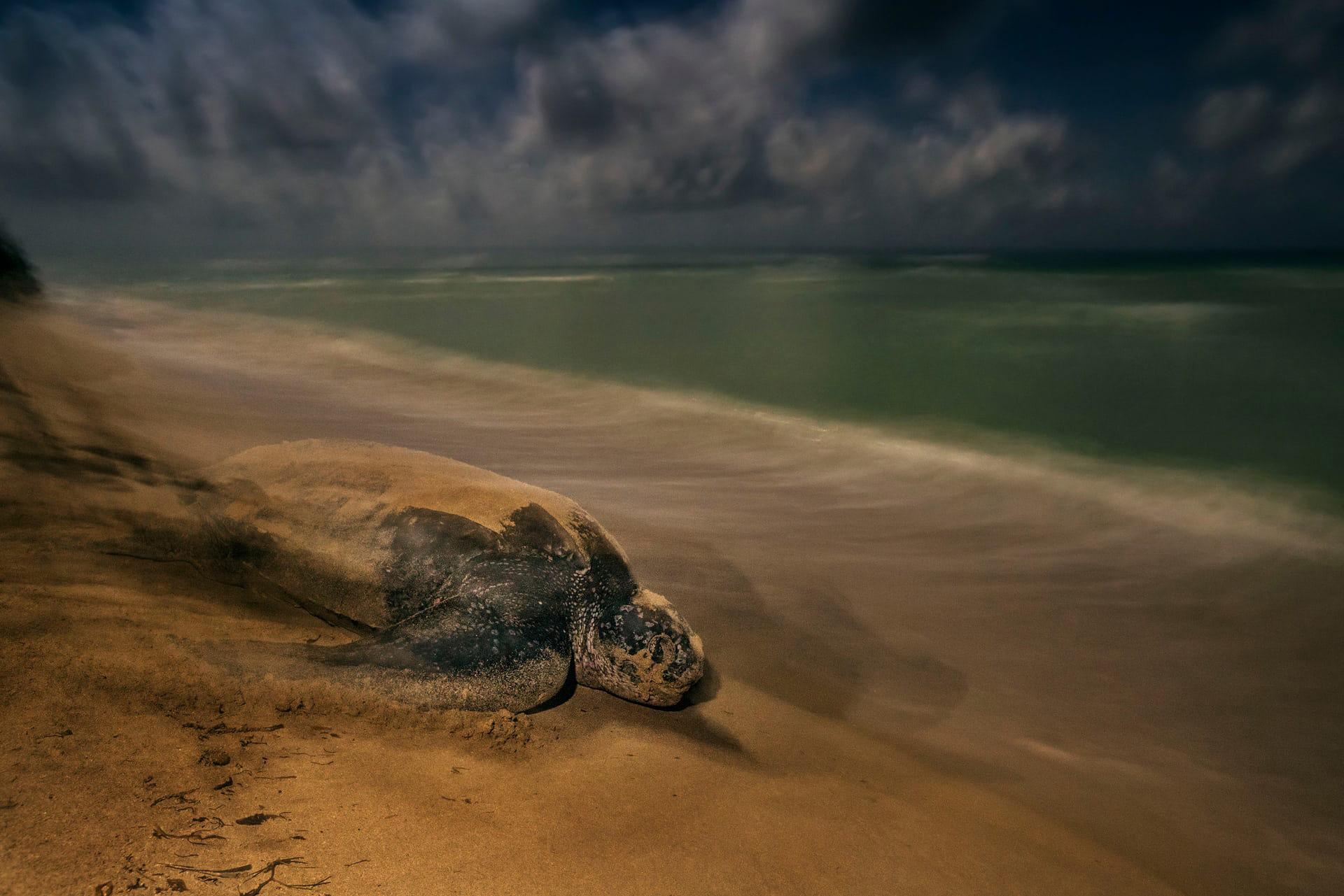"""'The Ancient Ritual', de Brian Skerry. Categoría: """"Comportamiento, anfibios y reptiles"""""""