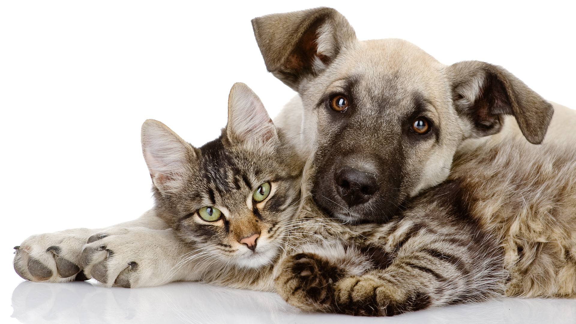 Cualquier tipo de animal puede ser tratado desde perros y gatos, bovinos y pájaros de distintas especies, hasta tortugas y hamsters (Getty Images)