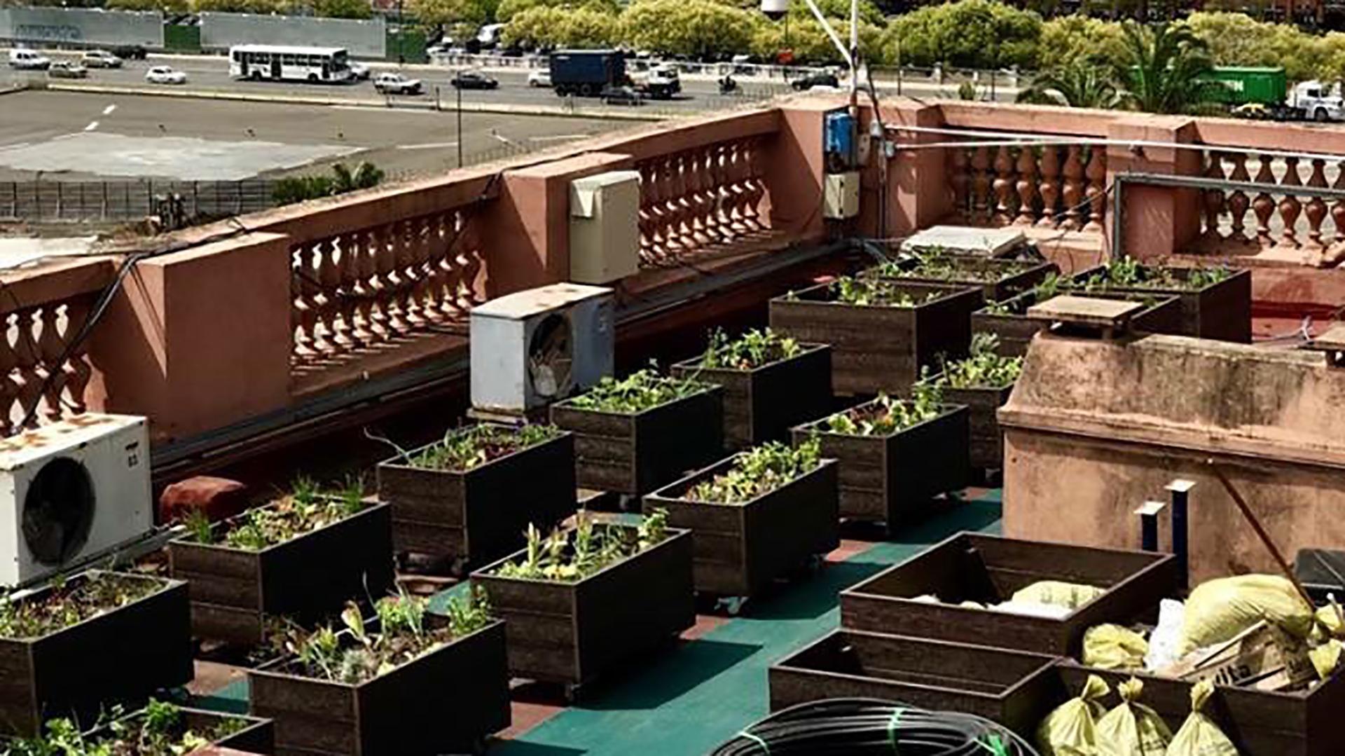 Cosecharon Las Primeras Verduras De La Huerta Agroecológica