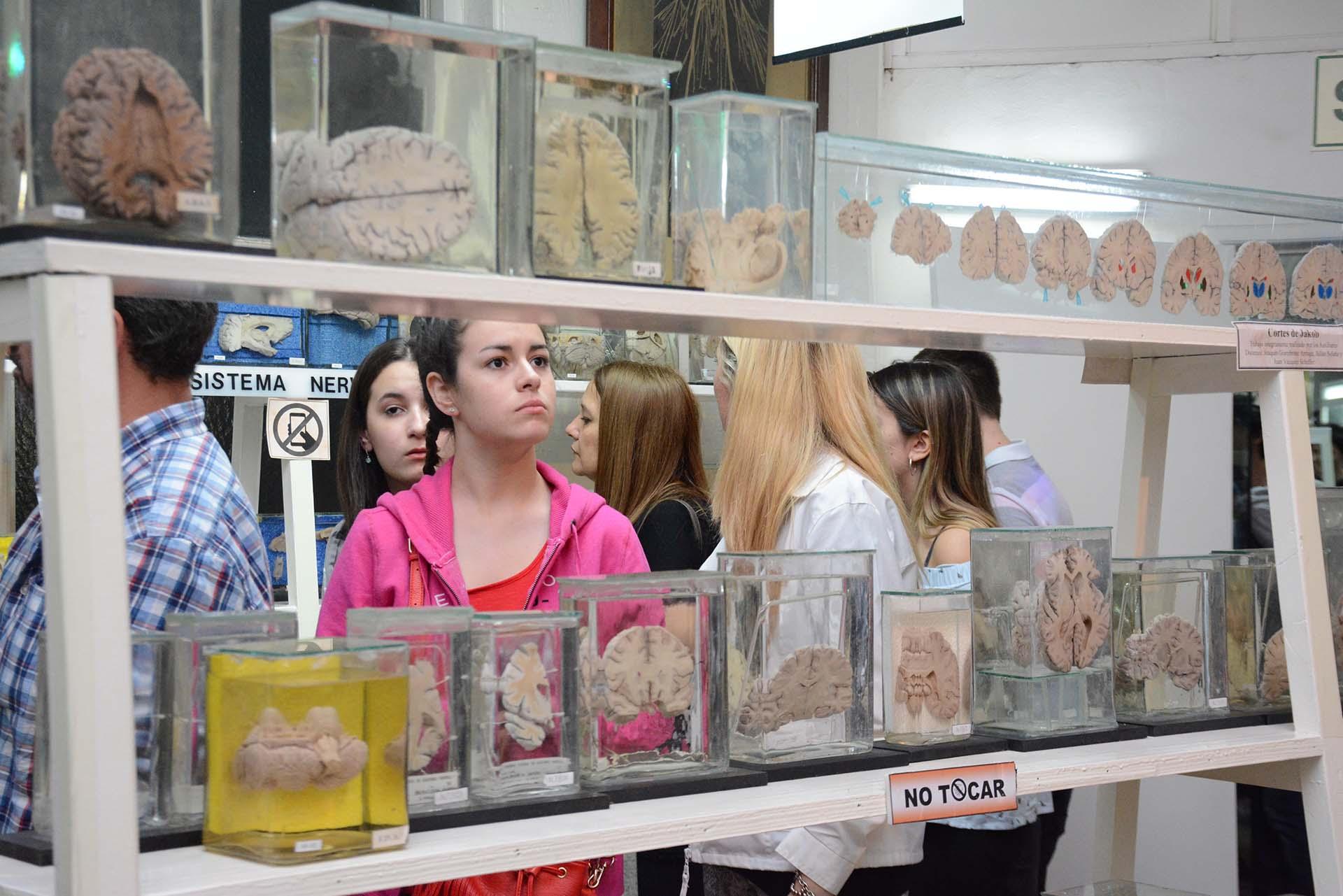 Museo de Anatomía J.J. Naón, Facultad de Medicina