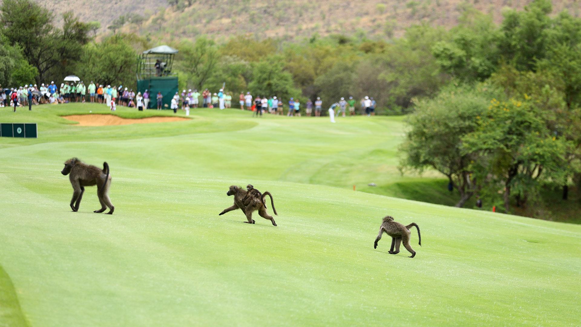 La seguridad del lugar no interfiere con los animales, pero sí detiene la competencia hasta que estos se retiren