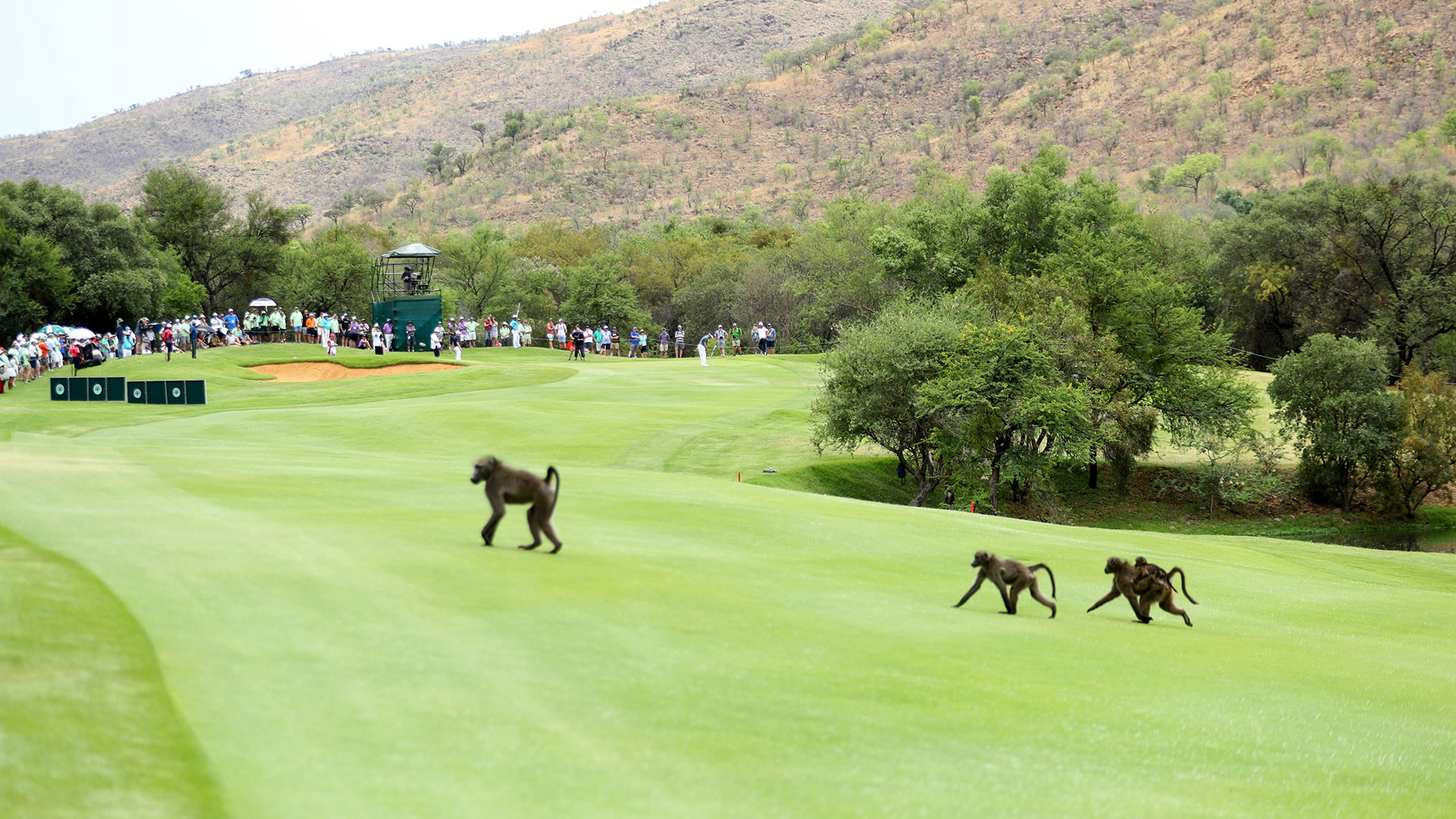 El Nedbank Golf Challenge se disputa todos los años en el The Gary Player Country Club de Sudáfrica