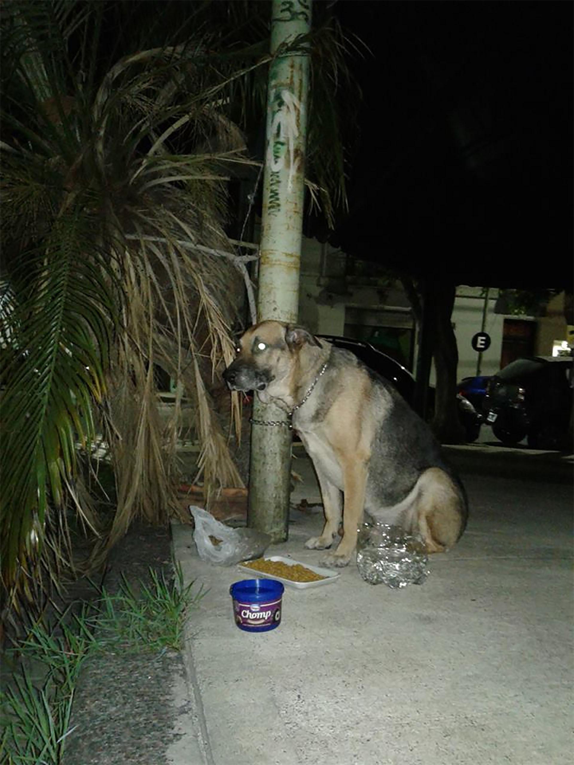 Ortega anoche. Fue abandonado atado a un poste con una cadena de ahorque.