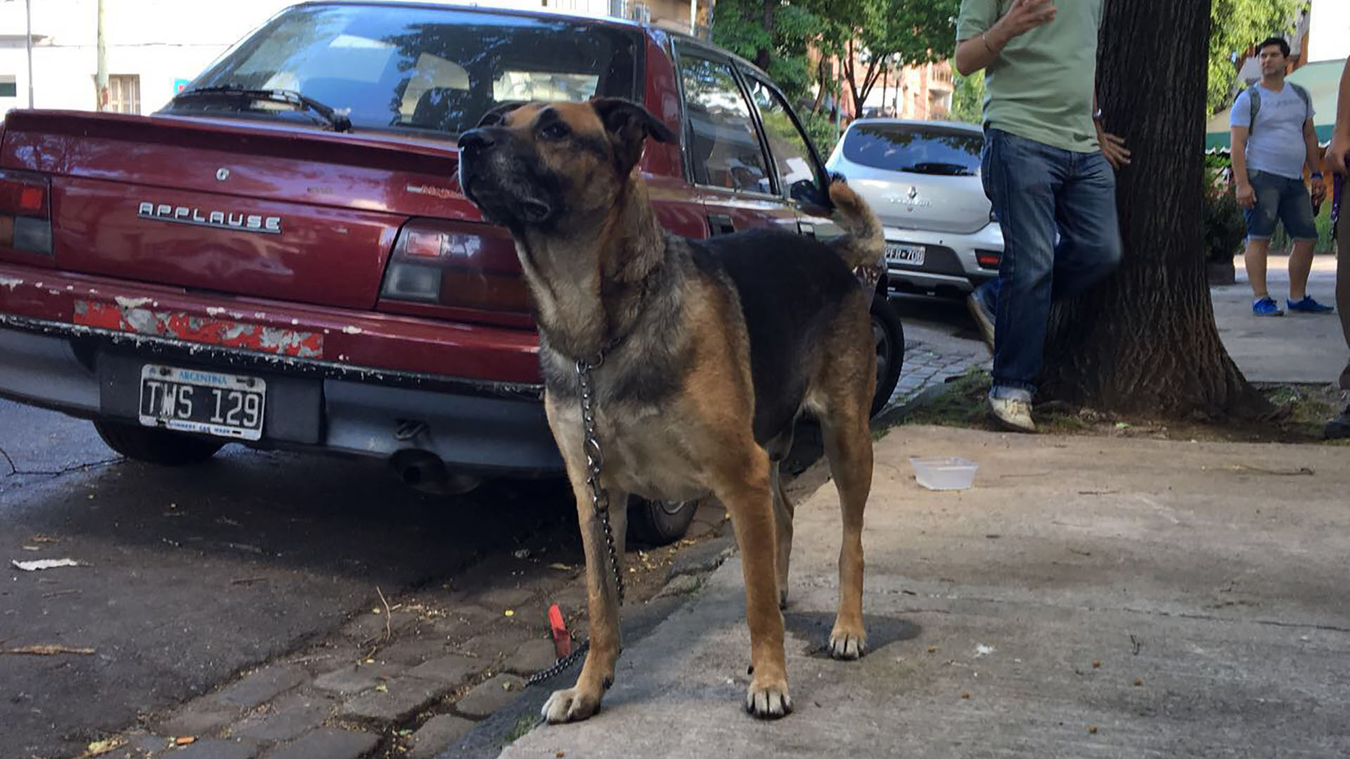 Ortega busca ayuda. Necesita un lugar de transito y una nueva familia que lo adopte.