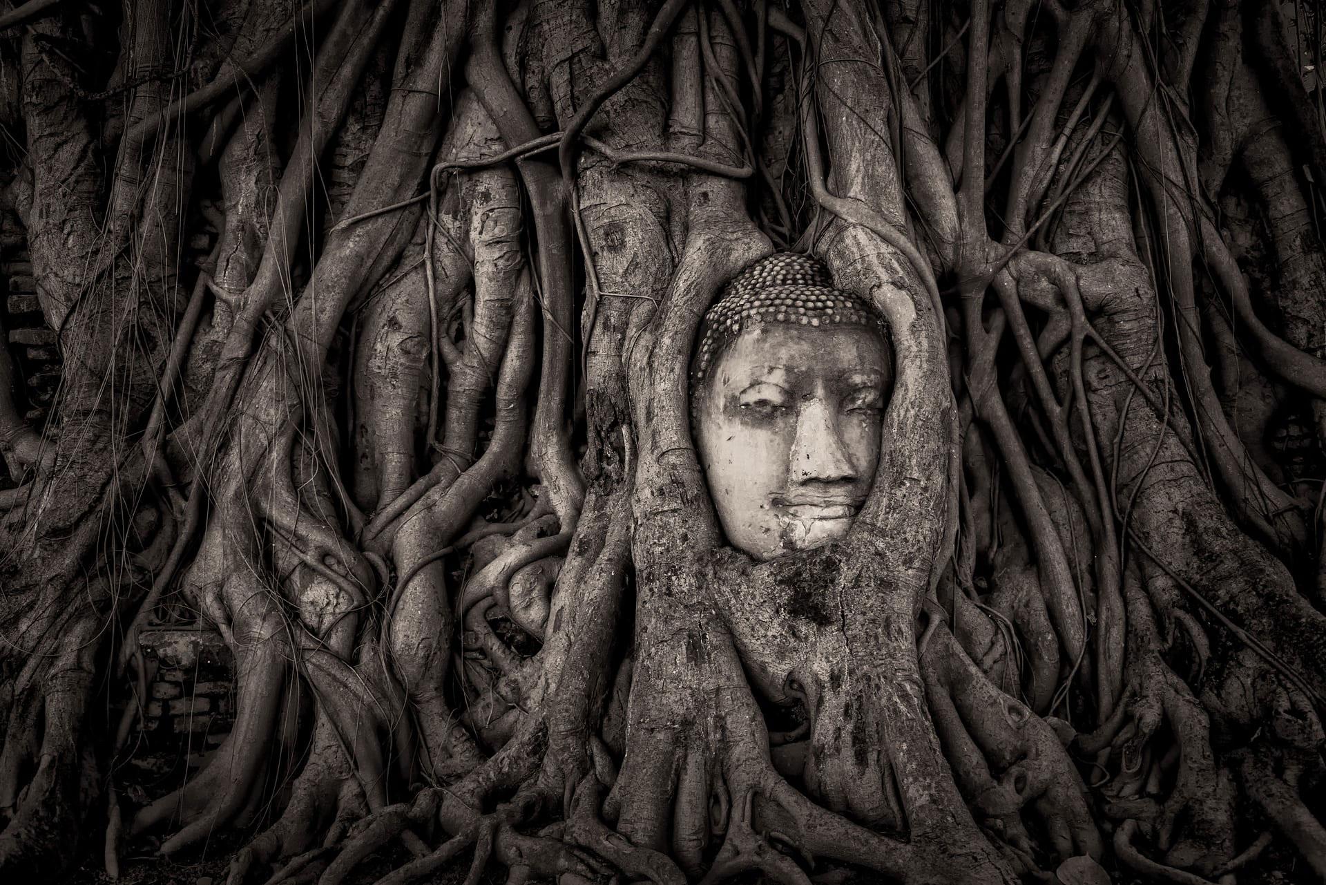 Templo Wat Mahathat en Ayutthaya, Tailandia, por Mathew Browne. Se trata de un templo budista caído en ruinas en 1767. Con el tiempo, un árbol creció alrededor de una de las estatuas remanentes del Buda