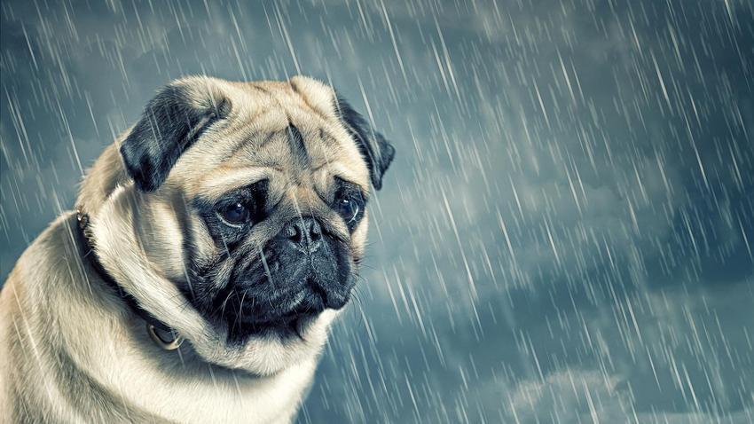 Saber diferencias las fobias de los miedos en las mascotas es imprescindible para mejorar la calidad de vida