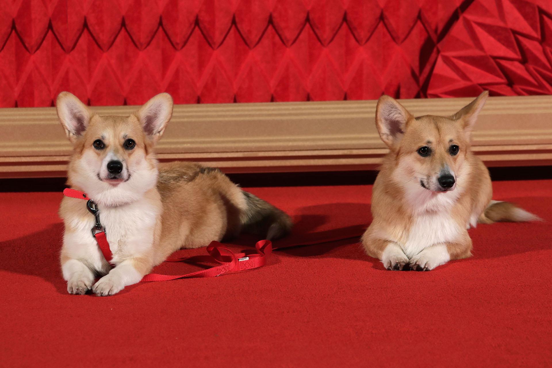 La ternura de los perros de la serie también estuvo presente en la red carpet londinense