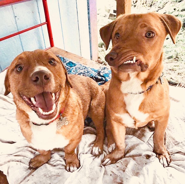 Picasso junto a su inseparable hermano Pablo, han sido adoptados y comenzarán una nueva vida como perros de terapia