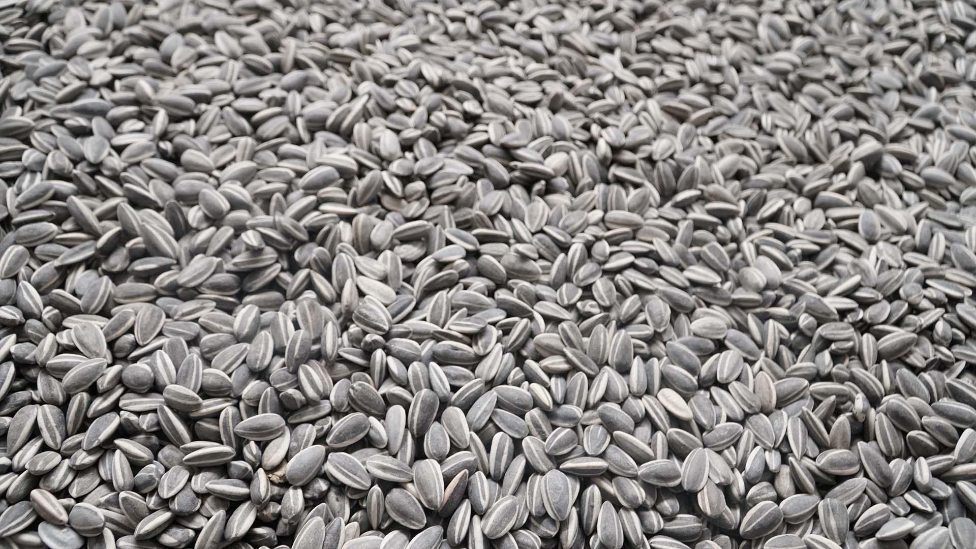"""""""Sunflower Seeds"""" (Semillas de girasol)"""
