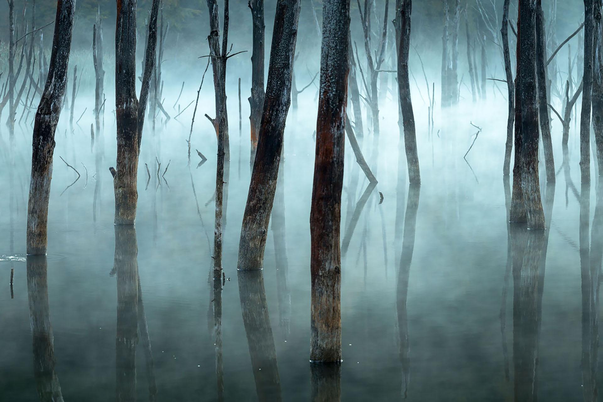 La niebla de la mañana empaña los árboles muertos del lago Cuejdel de Rumania, un embalse natural creado por los deslizamientos de tierra.