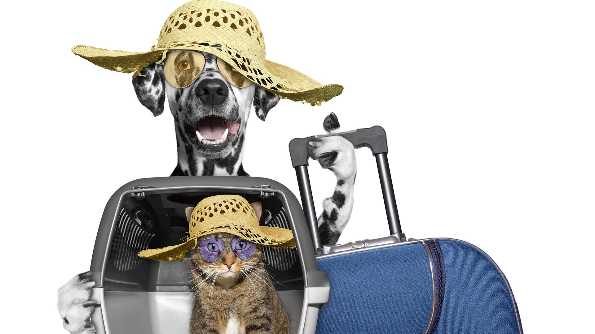 El costo del viaje de nuestro animal depende de su peso y del destino del vuelo.