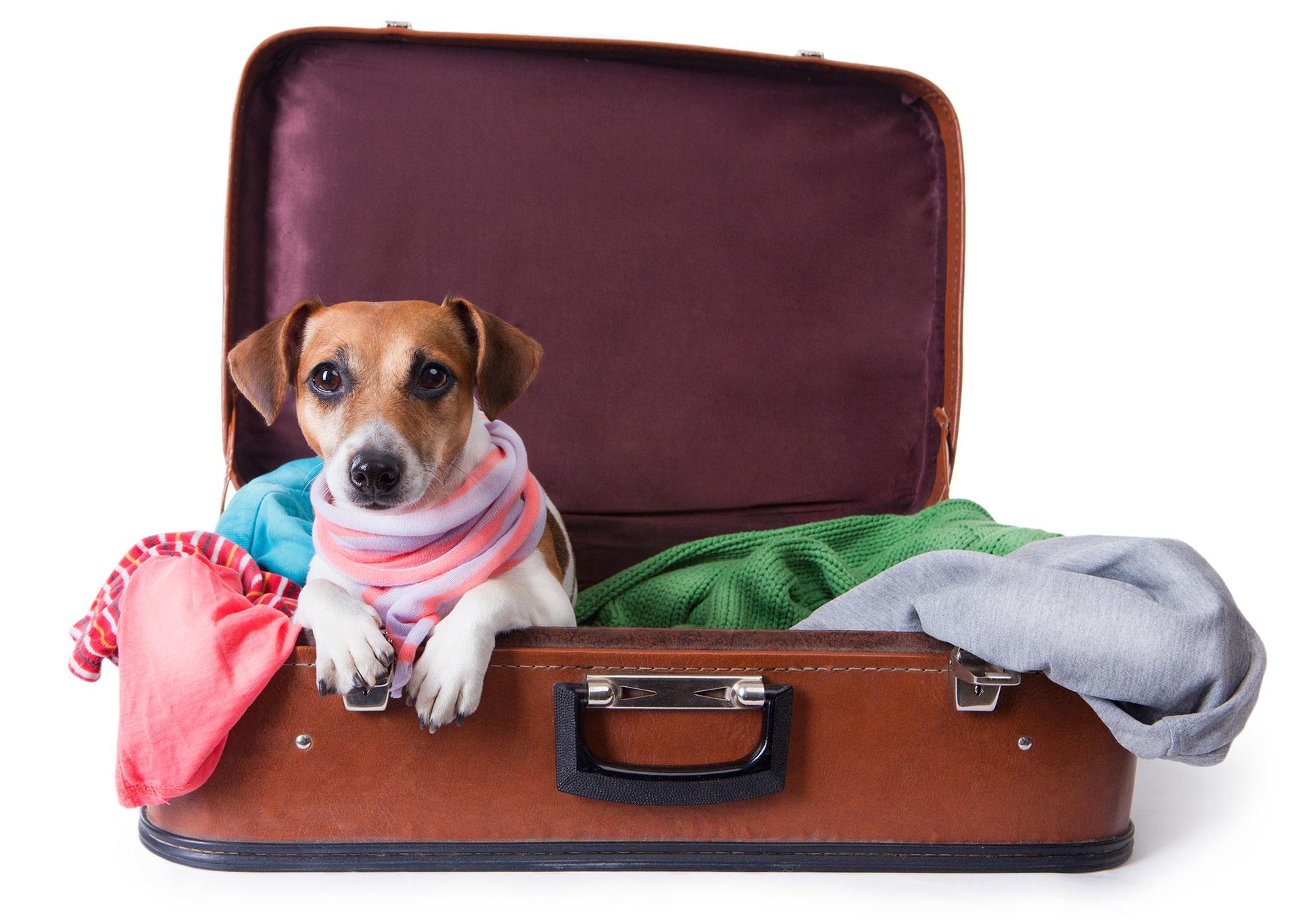 Antes de hacer las valijas hay que pasar por el veterinario.