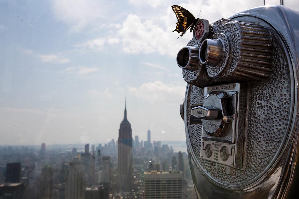 Una mariposa sobre un telescopio de Nueva York durante la eclipse total de sol de este año (Drew Angerer/Getty Images)