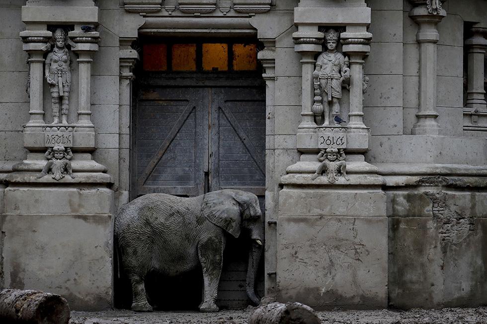 Un elefante africano en el zoologico de Buenos Aires en mayo de 2017 (AP /Natacha Pisarenko)