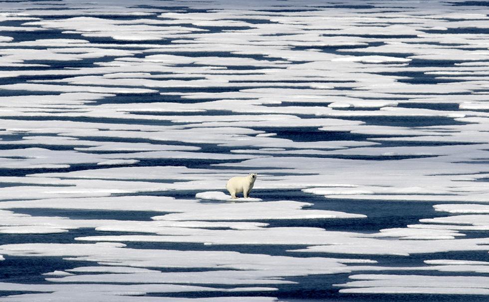 Un oso polar en el hielo en el estrecho de Franklin, en el archipiélago ártico canadiense (AP/David Goldman)
