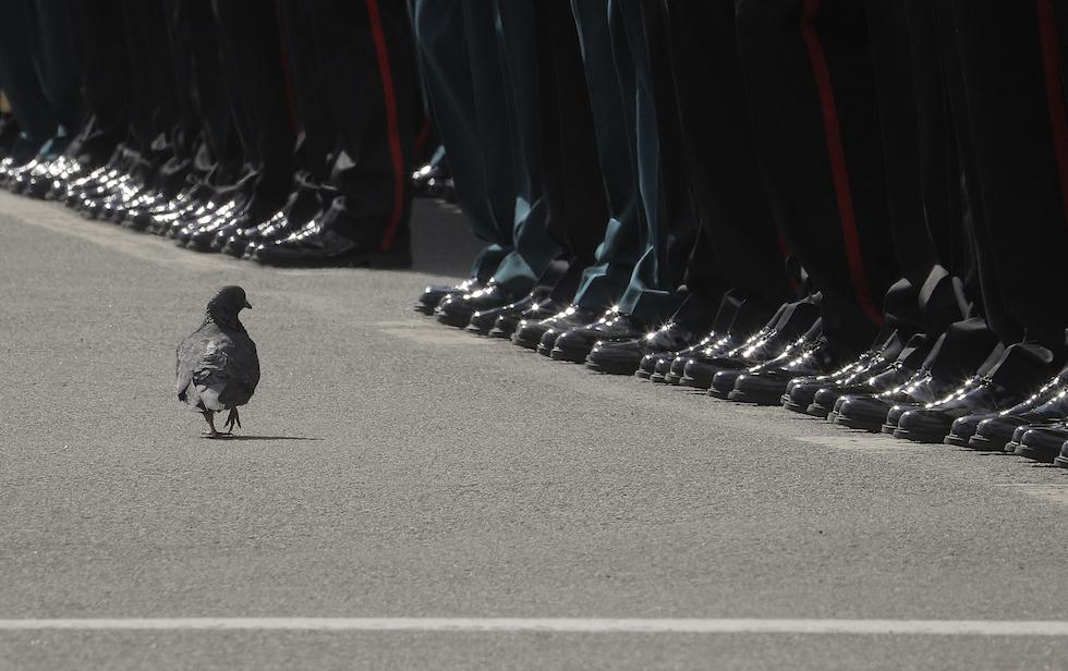 """Una paloma camina cerca de los soldados durante la parada para el """"Día de la Victoria"""" en San Petersburgo, en Rusia (AP Photo/Dmitri Lovetsky)"""