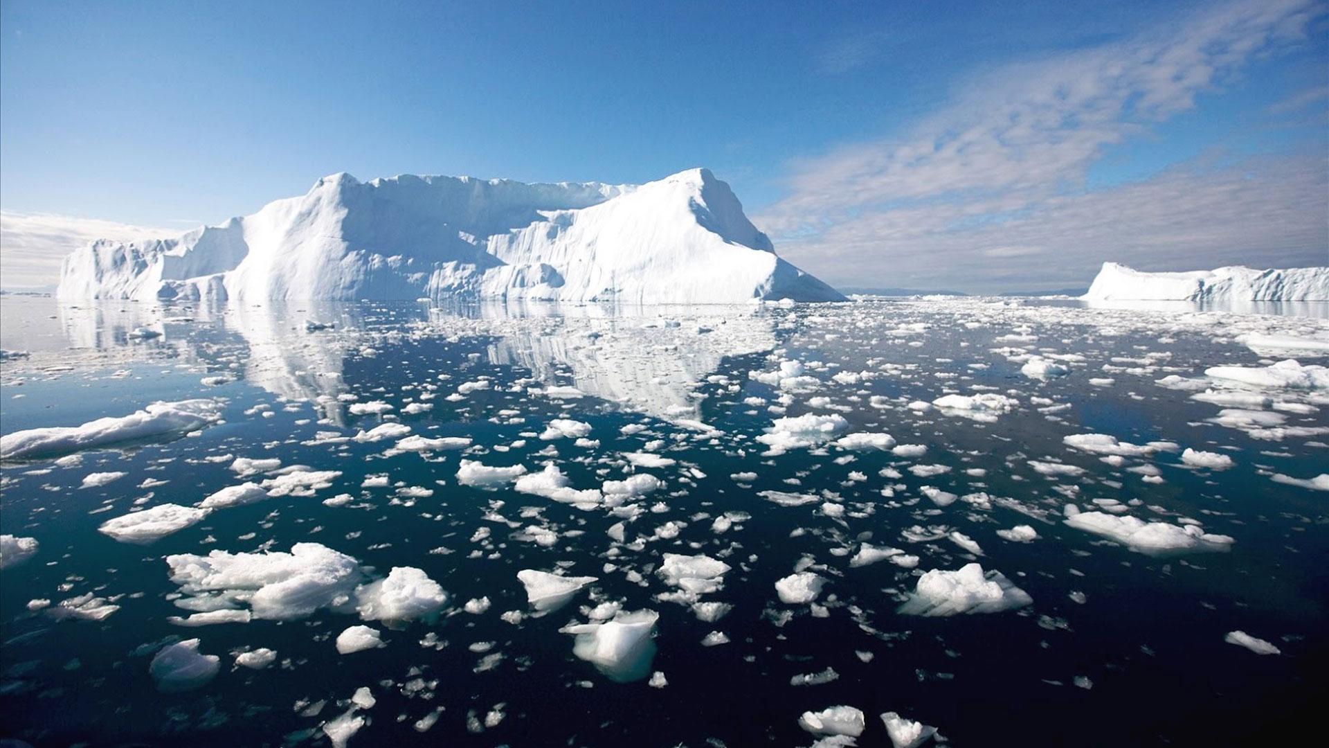Elincremento de la llegada de materiales derivados del deshielo a las aguas del Ártico podría afectar al ecosistema de la fauna ártica, caracterizada por tener especies endémicas