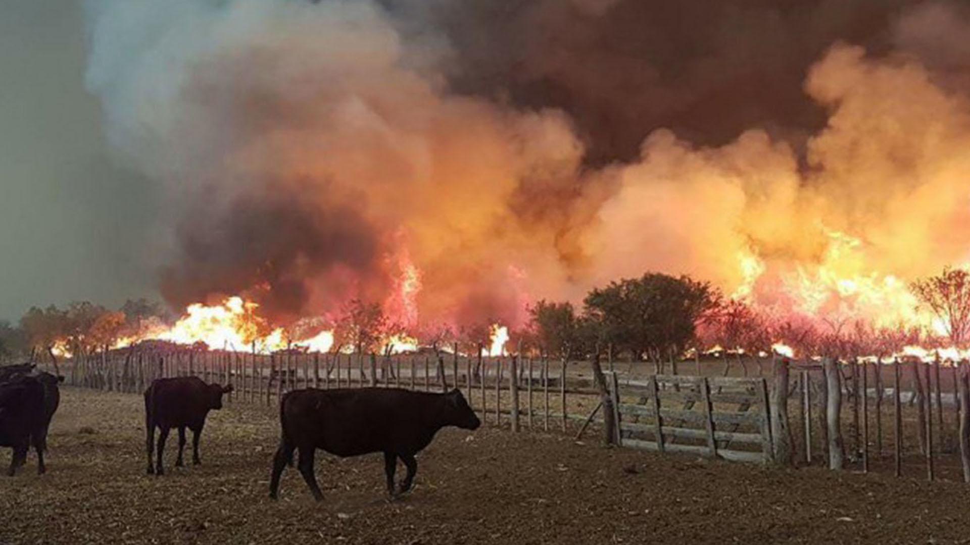 El Senasa facilitará el traslado de animales para la prevención de incendios