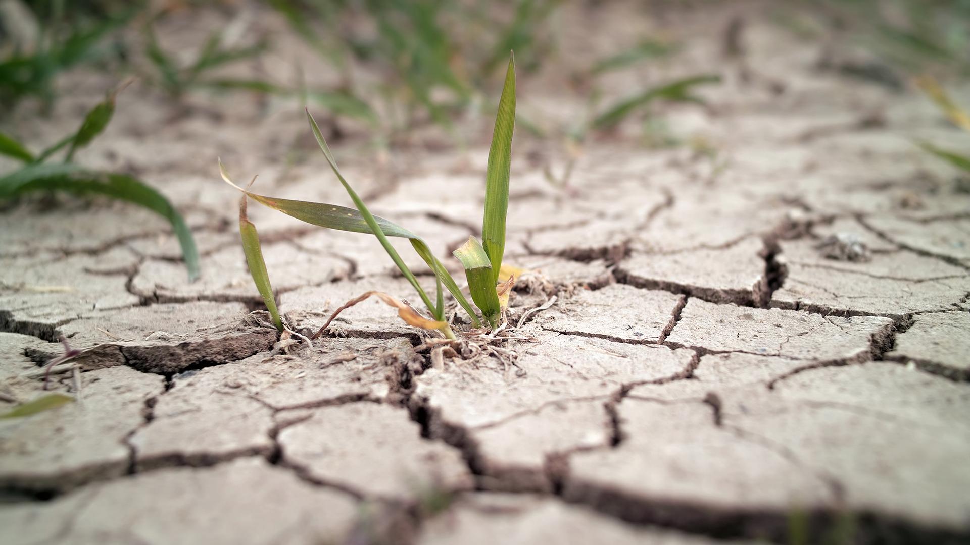 Bayer cuenta con semillas anti-sequía en los Estados Unidos que todavía no están disponibles en otros países. (Getty Images)