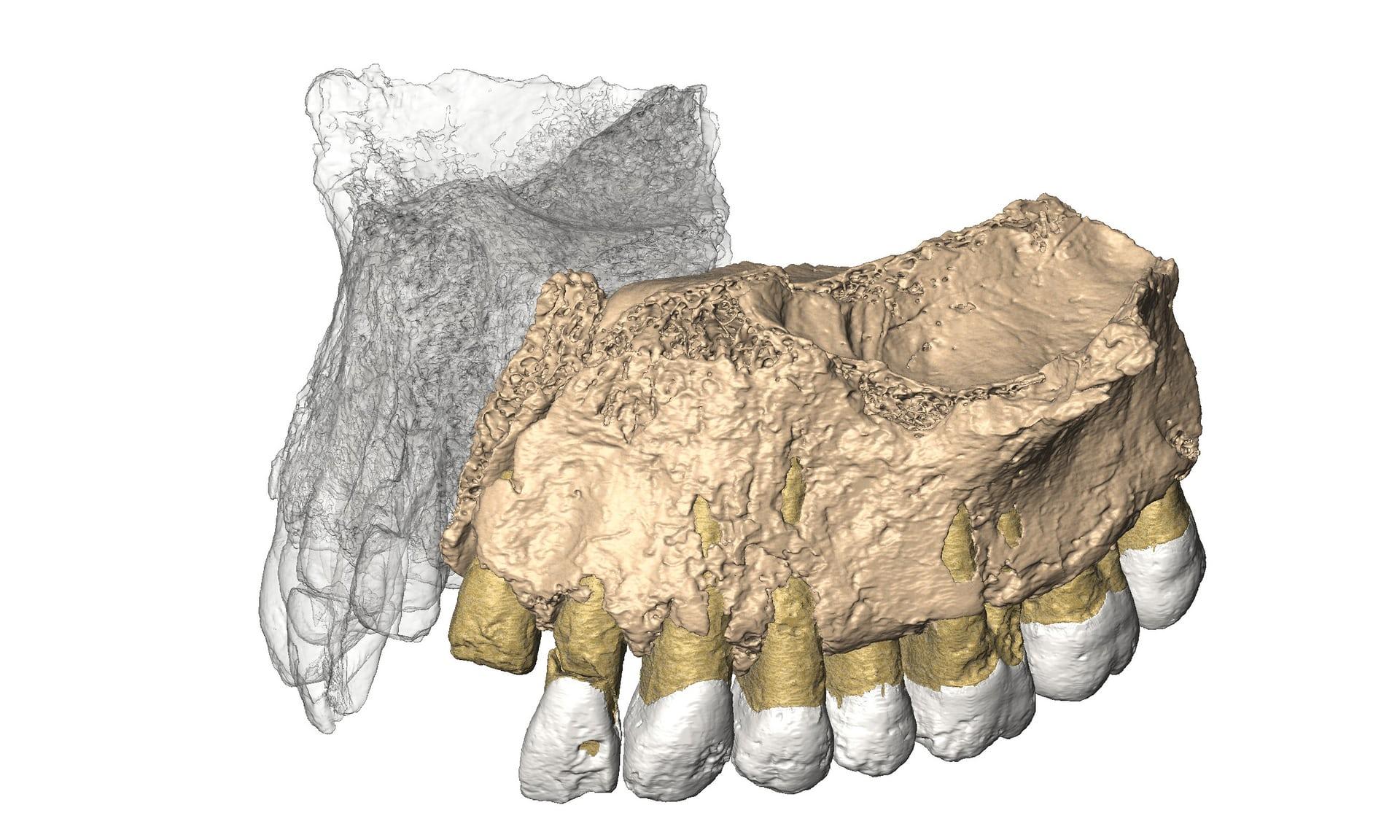 Un fósil sugiere que el hombre moderno no salió de África hace ...