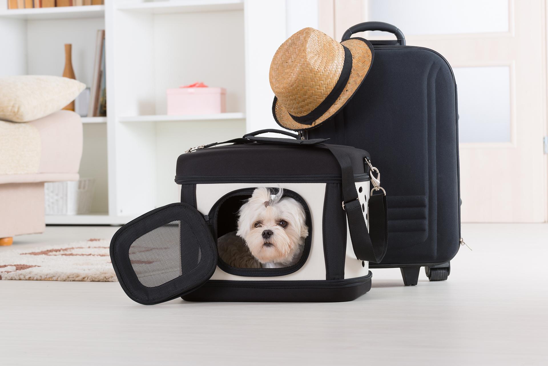 Es importante que la mascota tenga una previa adaptación para poder viajar en avión (Getty Images)
