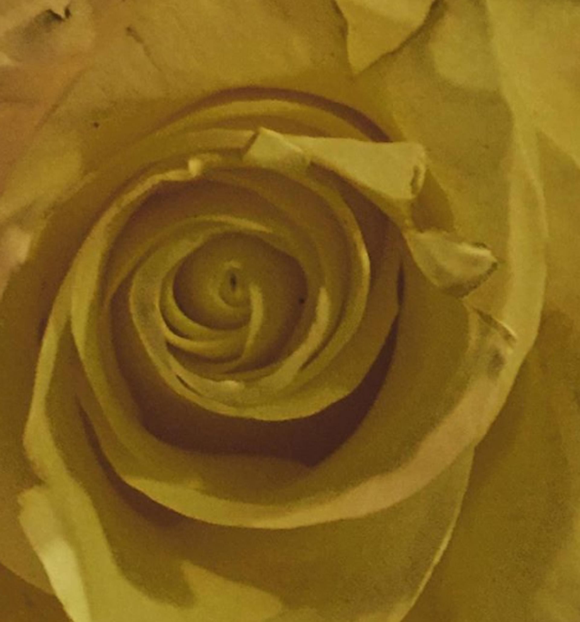 Espiral áurea. La (im)perfección de una rosa dorada