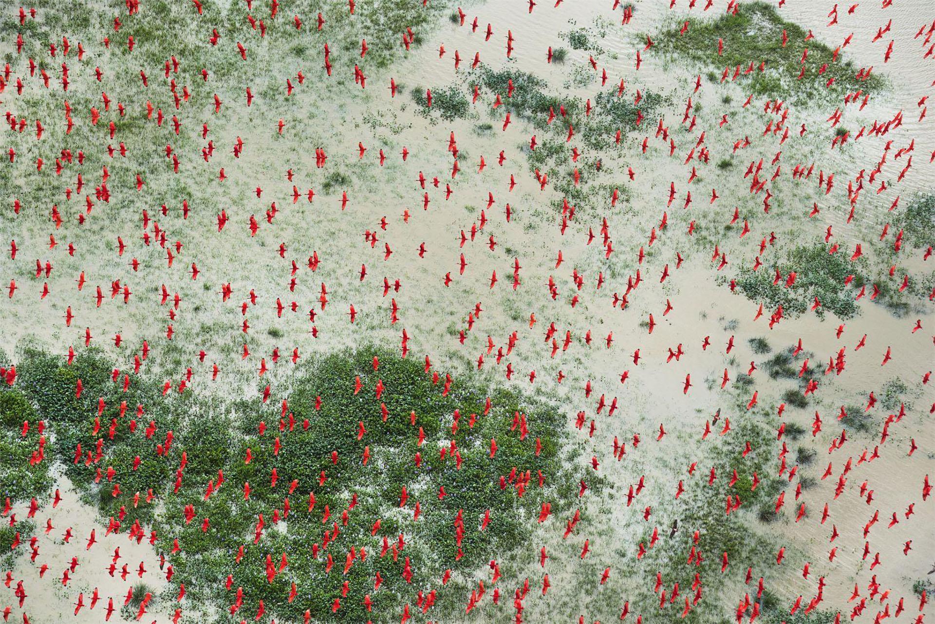 Amazon: Paradise Threatened – Amazonas: un paraíso amenazadoDeforestación en el Amazonas, Brasil: después de disminuir desde los picos principales en 1995 y 2004, la tasa de deforestación en la Amazonas aumentó bruscamente en 2016. (Daniel Beltra, Estados Unidos)