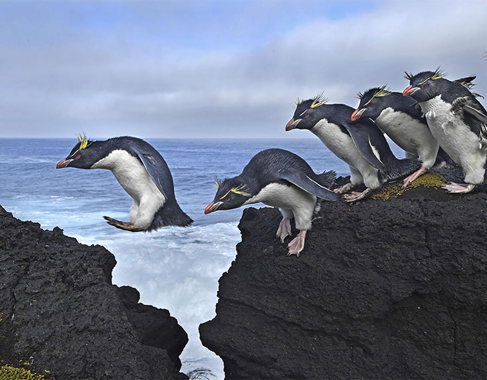 Galapagos: Rocking the Cradle – Galápagos: meciendo la cunaCuatro grandes corrientes oceánicas convergen a lo largo del archipiélago de Galápagos, creando las condiciones para una extraordinaria diversidad de vida animal. (Thomas P. Peschak, Alemania)