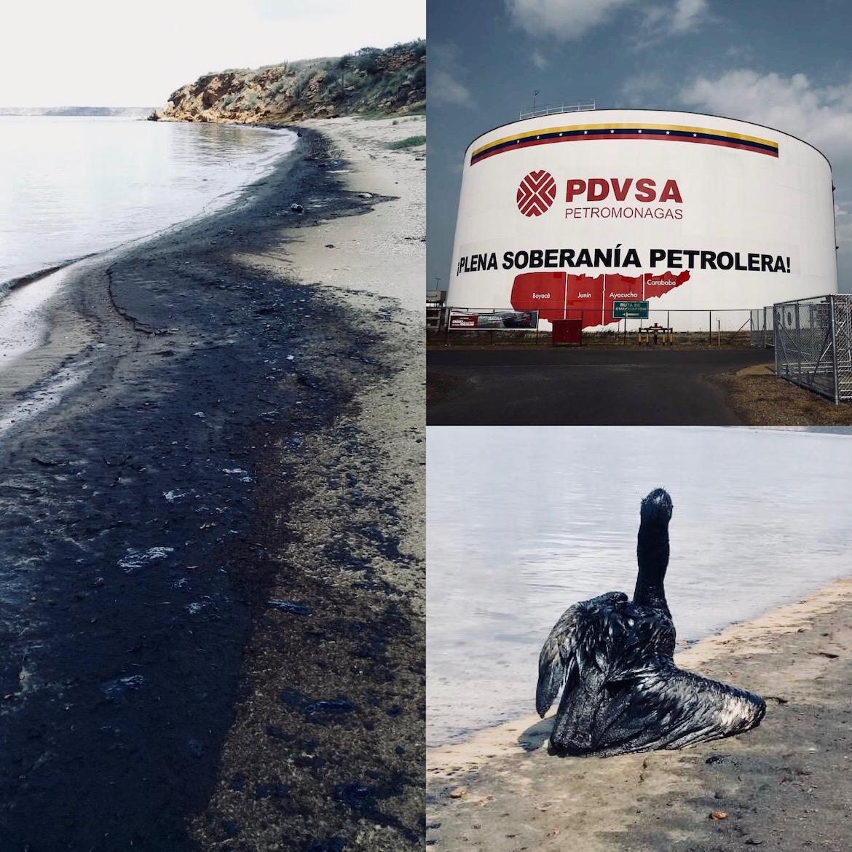 Las playas de Amuay y la fauna local se vieron gravemente afectadas por el derrame del pasado mes de octubre. PDVSA nunca llevó adelante tareas de limpieza ni recompensó a los pescadores locales