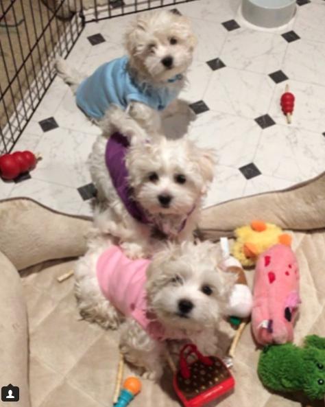 Miss Violet, Miss Scarlett y Fanny son los nombres de las actuales mascotas de Barbra Streisand (Instagram: @barbarastreisand)
