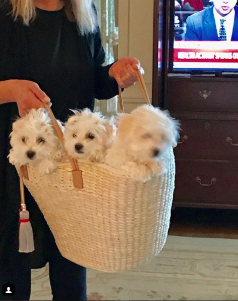 Las mascotas de Barbra Streisand son raza Cotón de Tulear (Instagram @barbarastreisand)