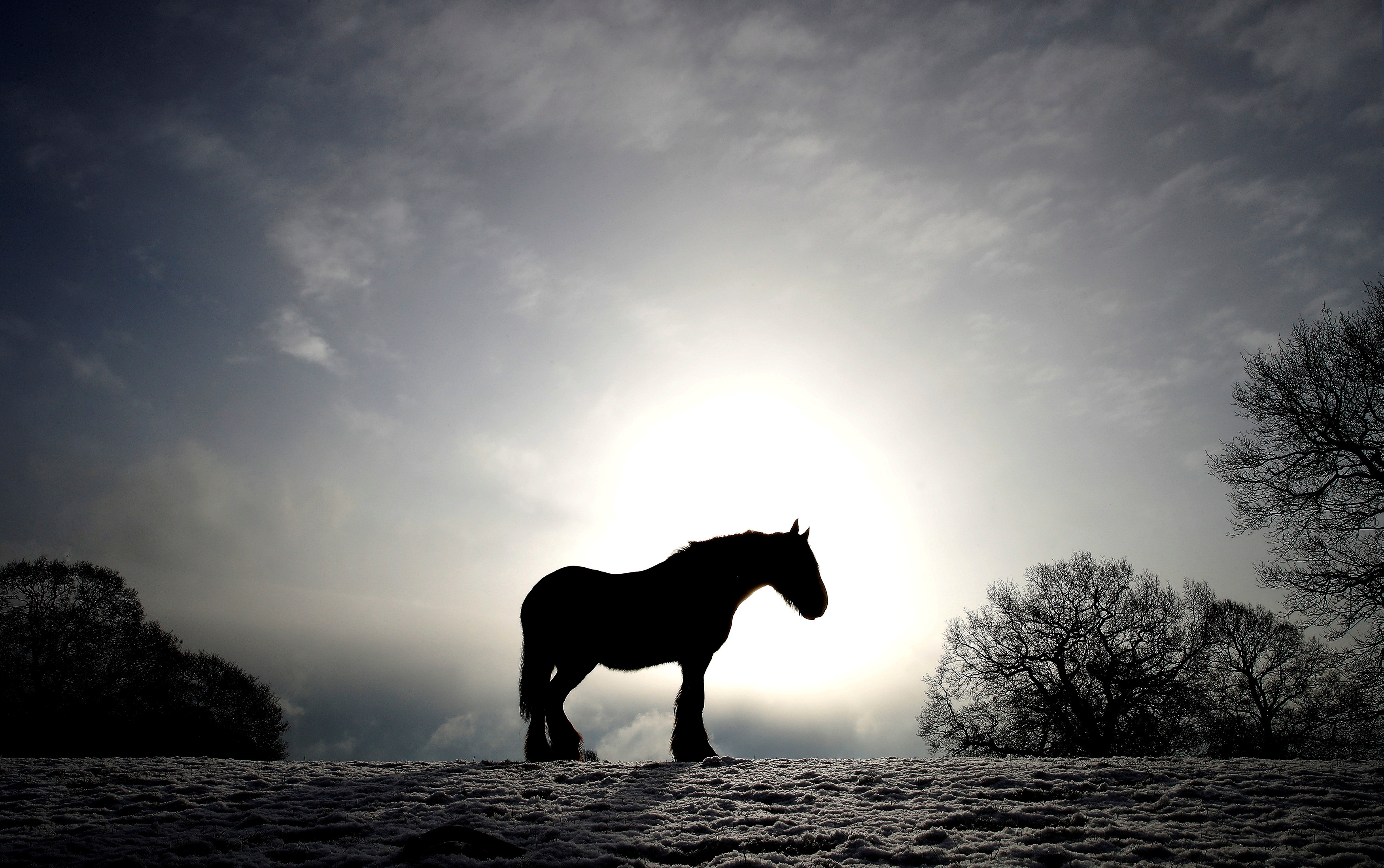 Un caballo en Keele, Newcastle-under-Lyme, Reino Unido (REUTERS/Carl Recine)