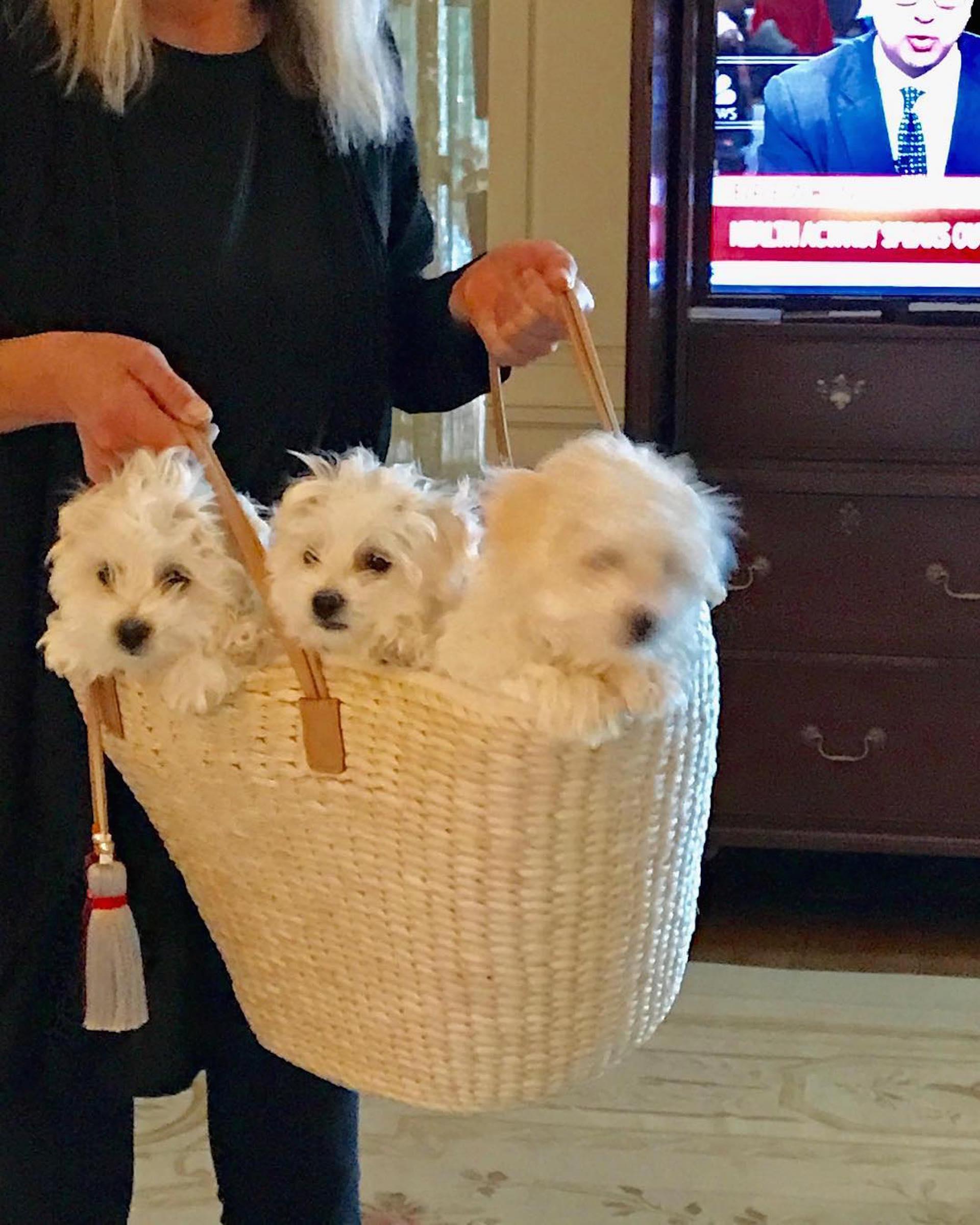 Los perros clonados más un primo (Foto Instagram)