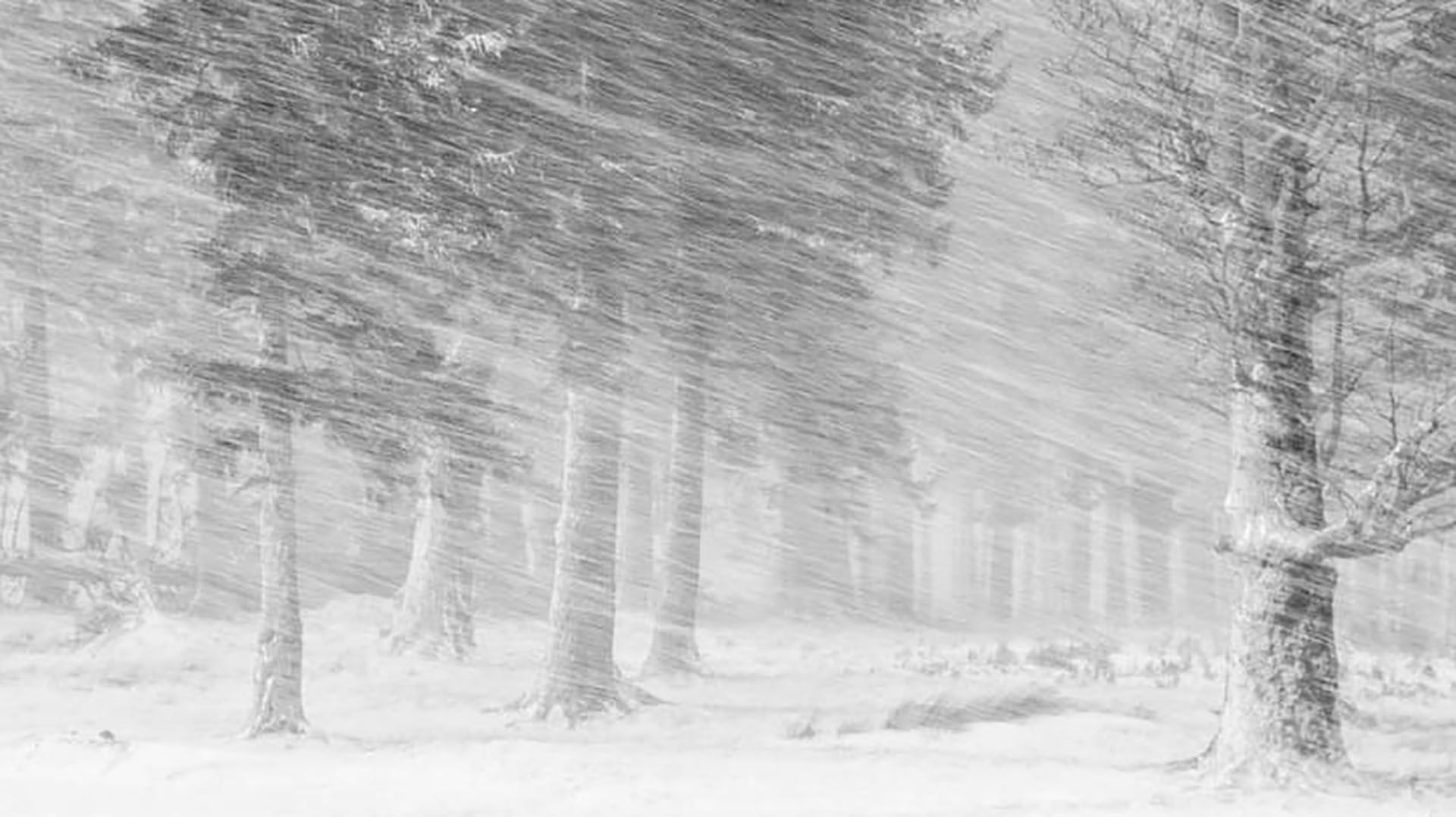 En la categoría Snow, la imagen ganadora es la del Parque Nacional de las Montañas Ciucas en Rumanía, de Cosmin Stan