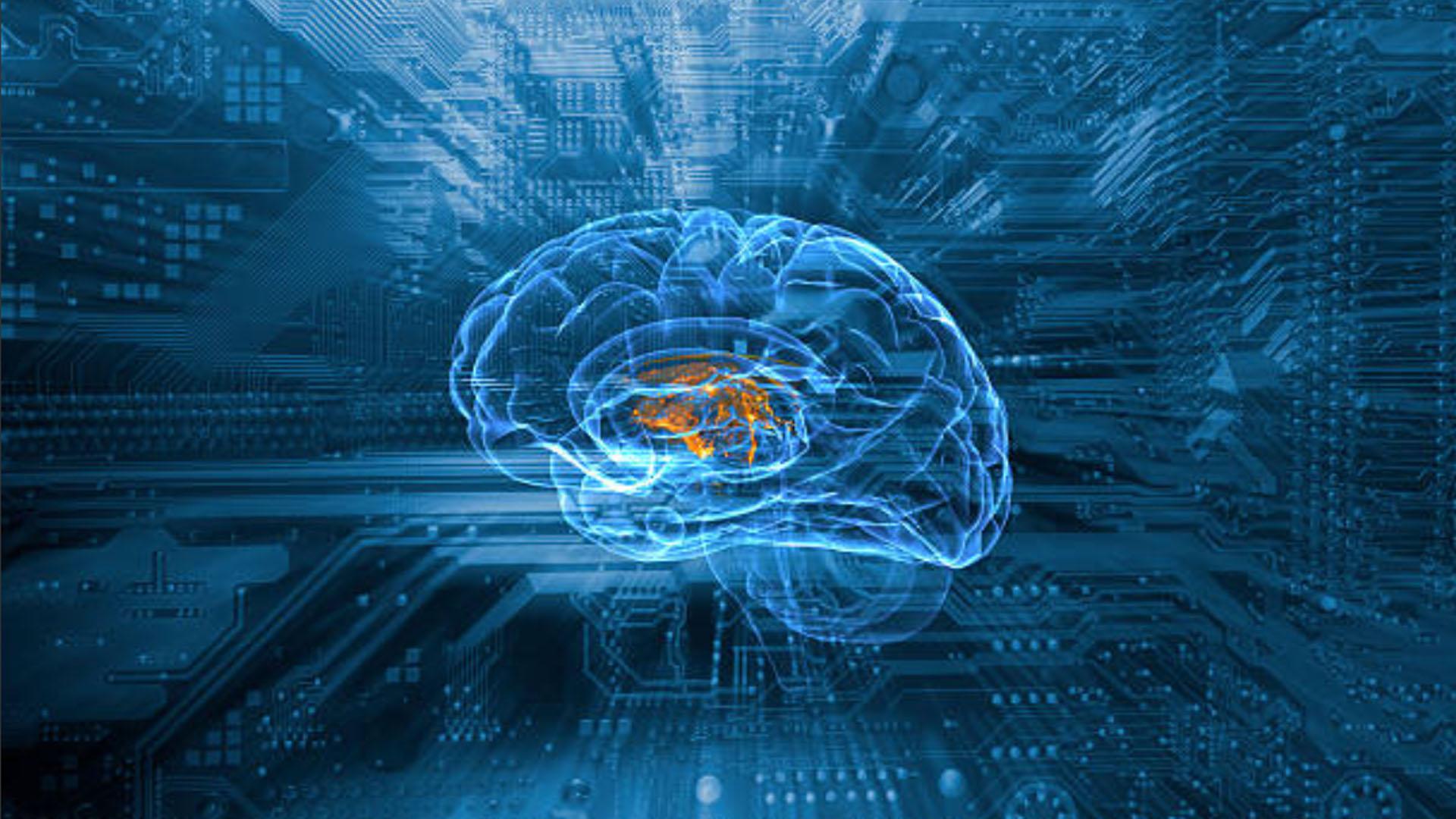 Descubren un misterioso tipo de neurona que podría hacer especial al ...